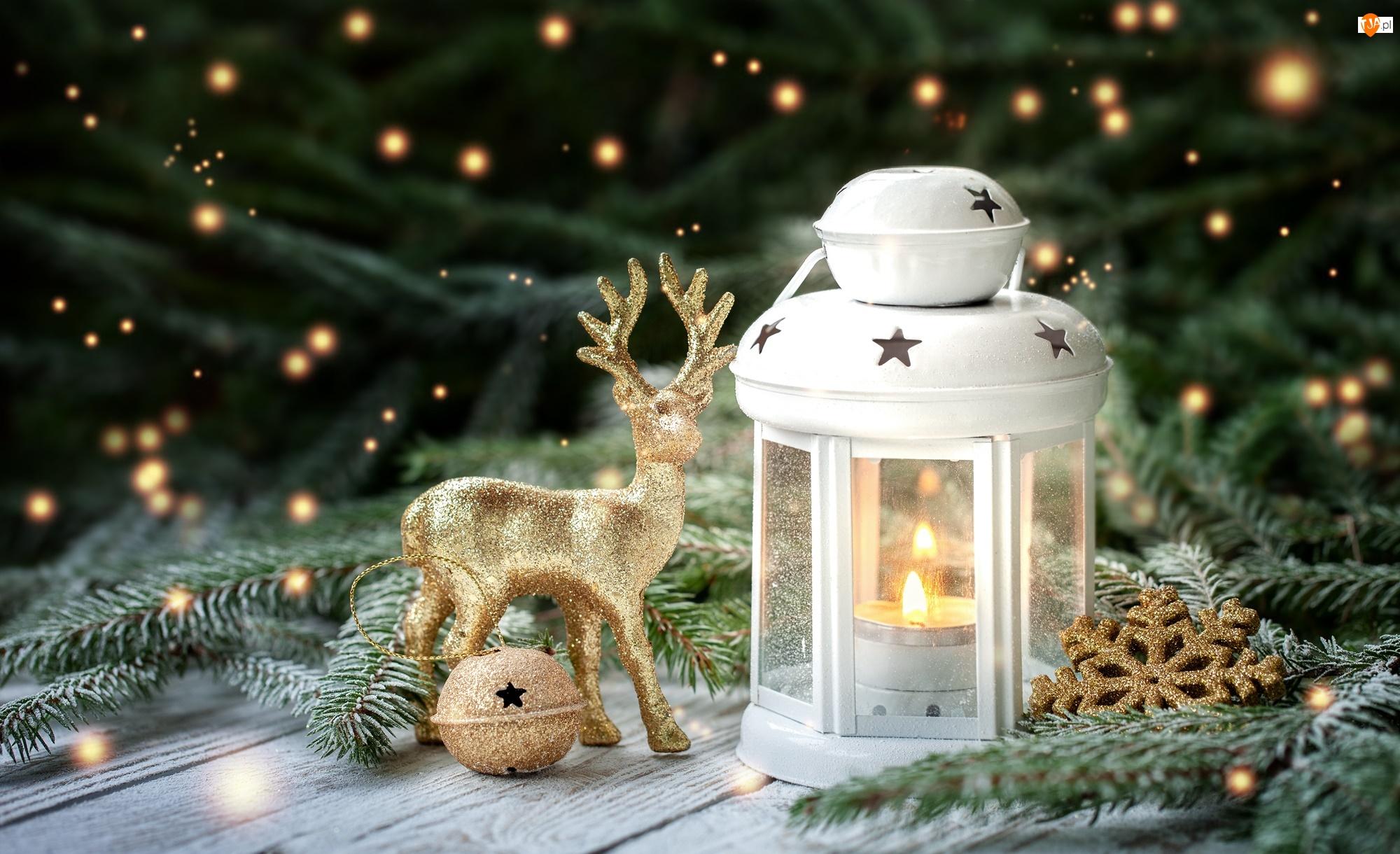 Jelonek, Kompozycja, Świerk, Boże Narodzenie, Lampion, Dekoracje