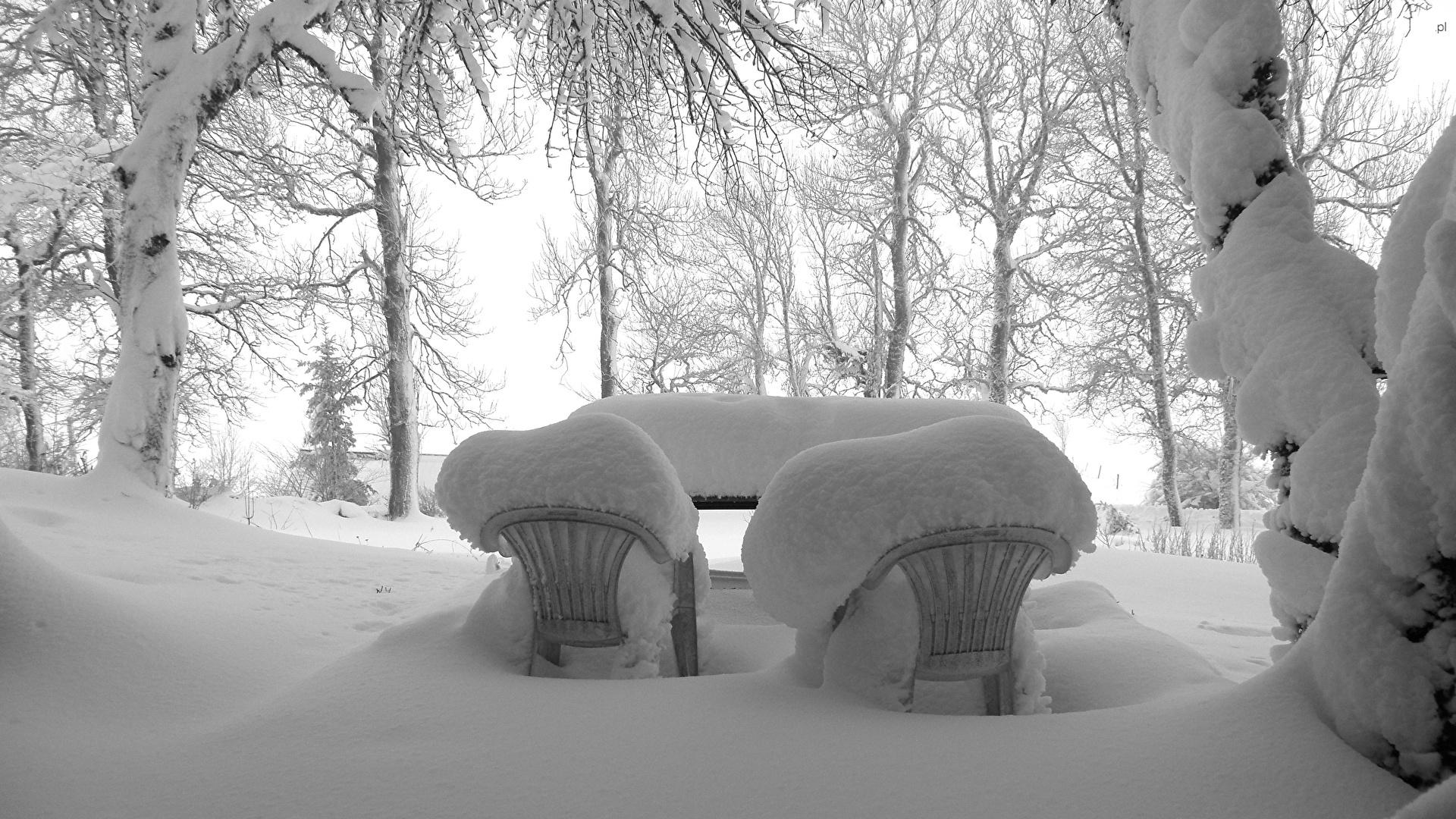 Drzewa, Krzesła, Śnieg, Zima, Zaśnieżone