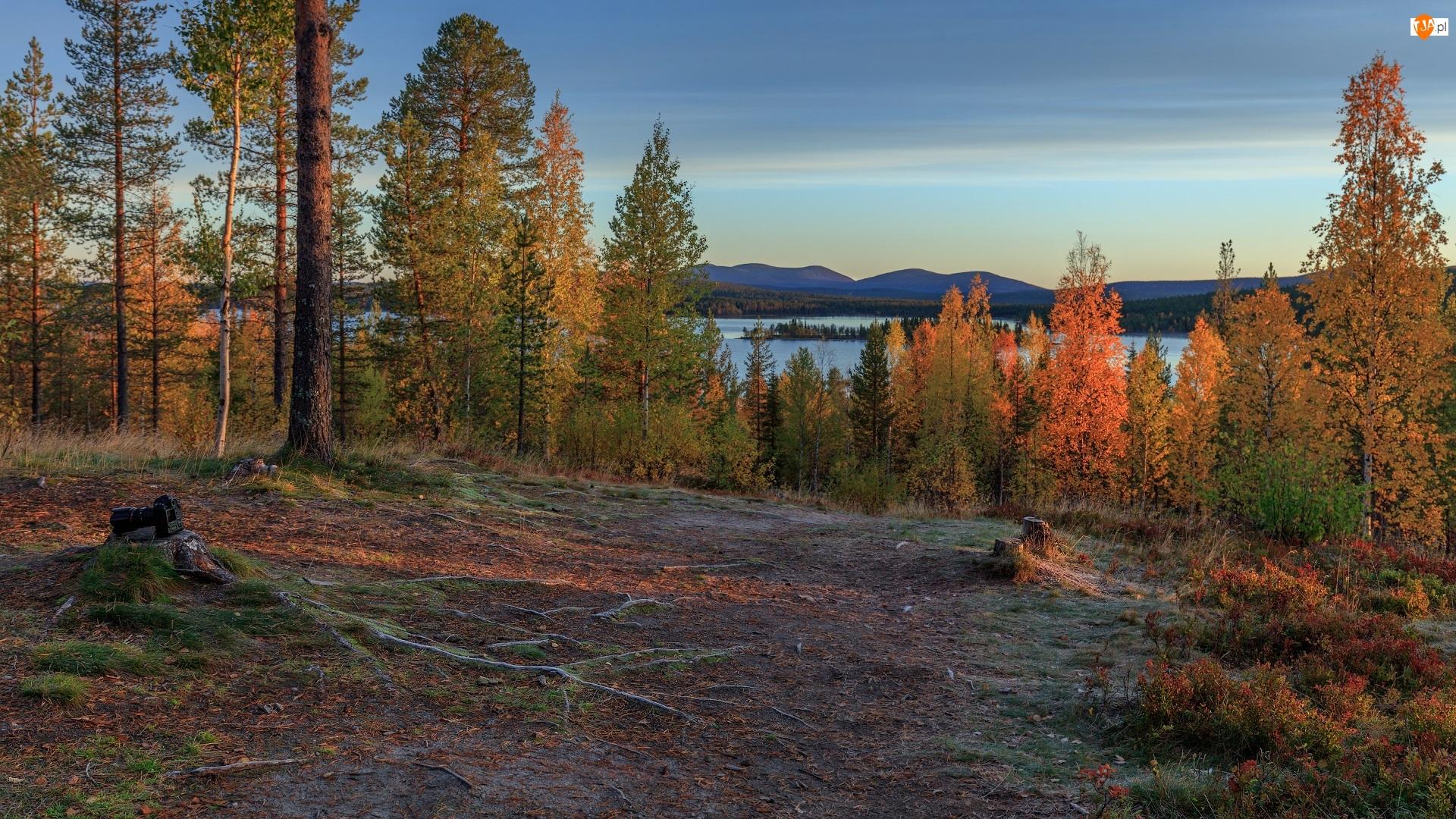Drzewa, Aparat fotograficzny, Jezioro, Jesień, Pień