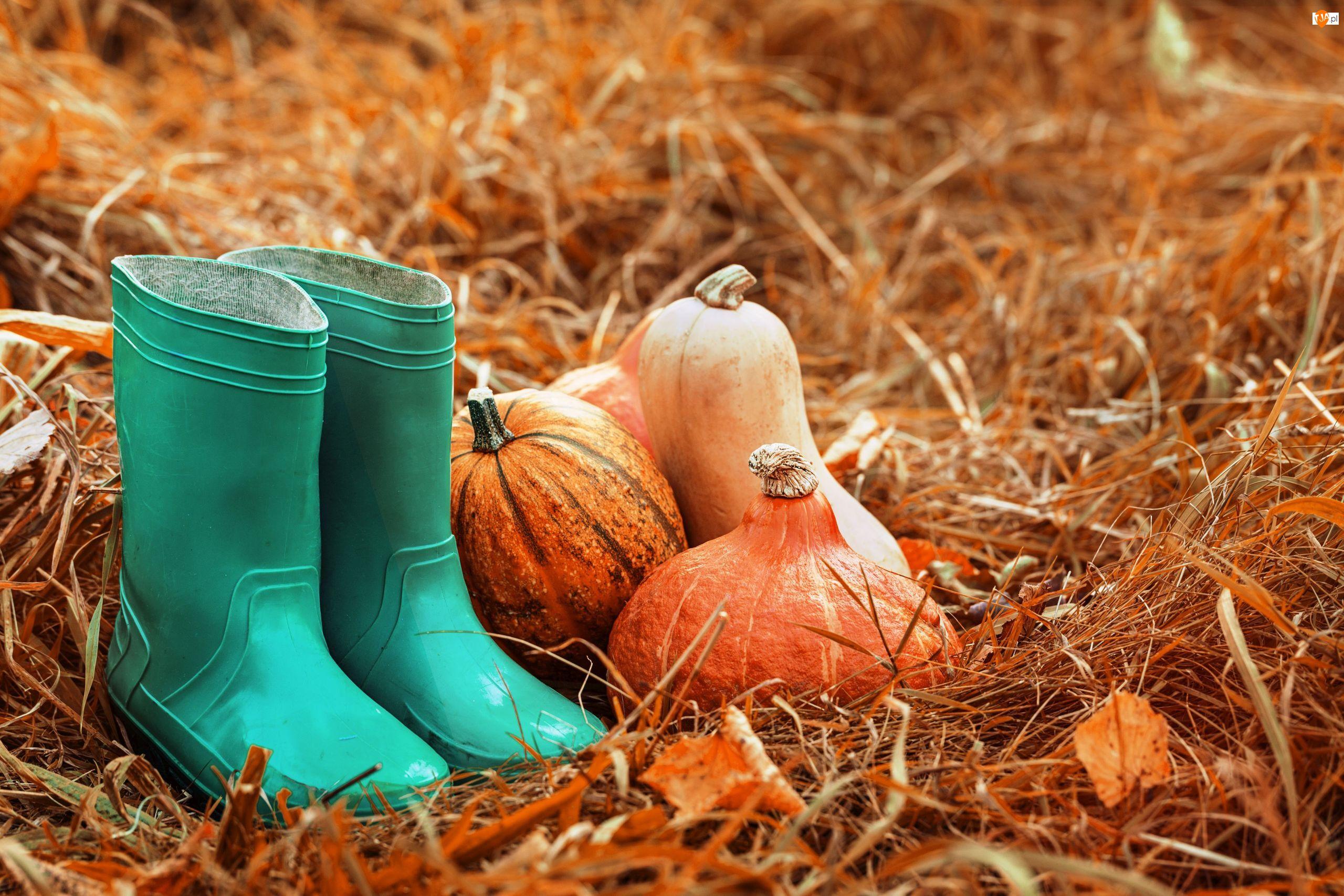 Ogród, Jesień, Dynie, Liście, Kalosze, Trawa