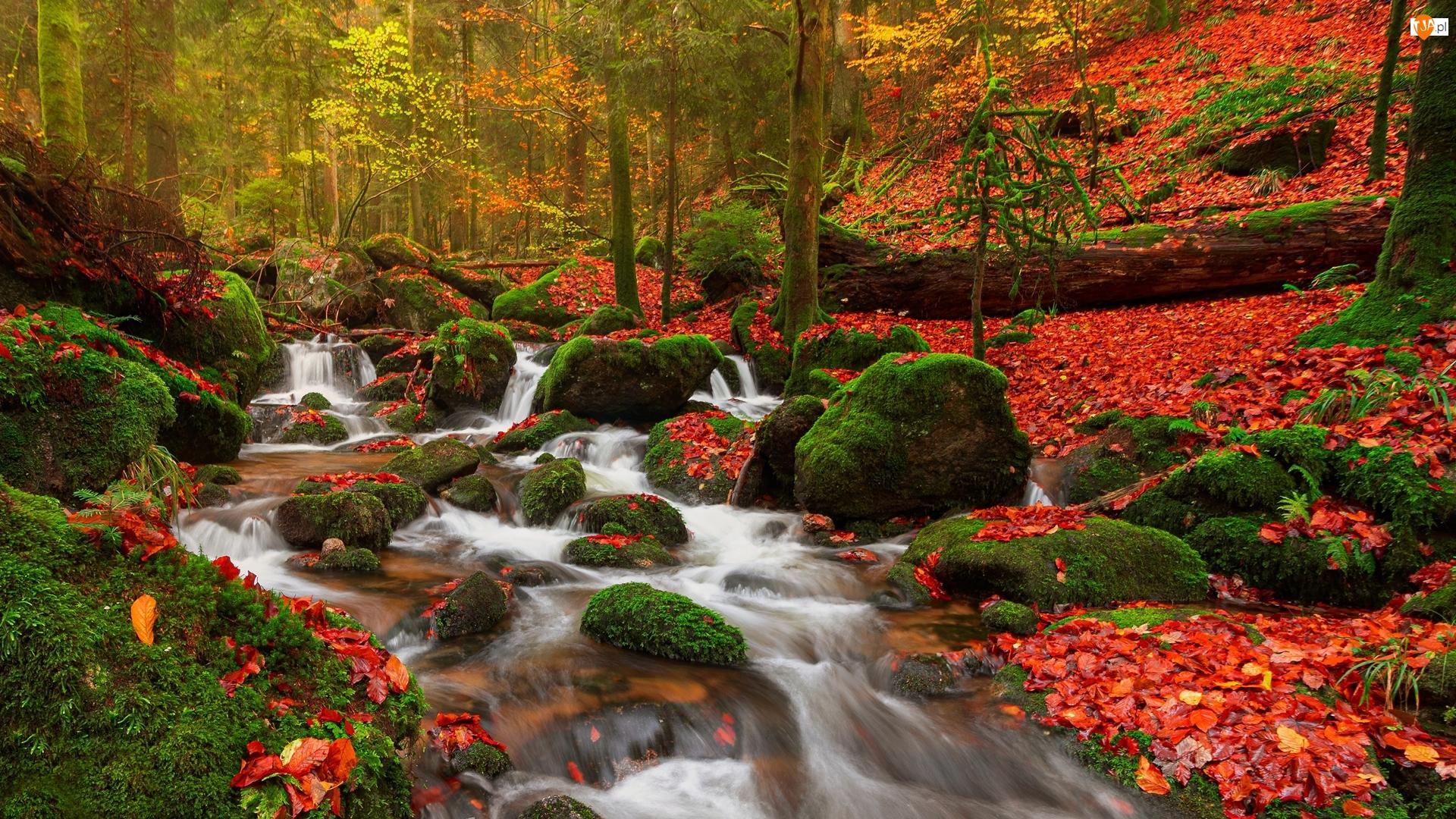 Rzeka, Omszałe, Liście, Las, Opadłe, Jesień, Kamienie