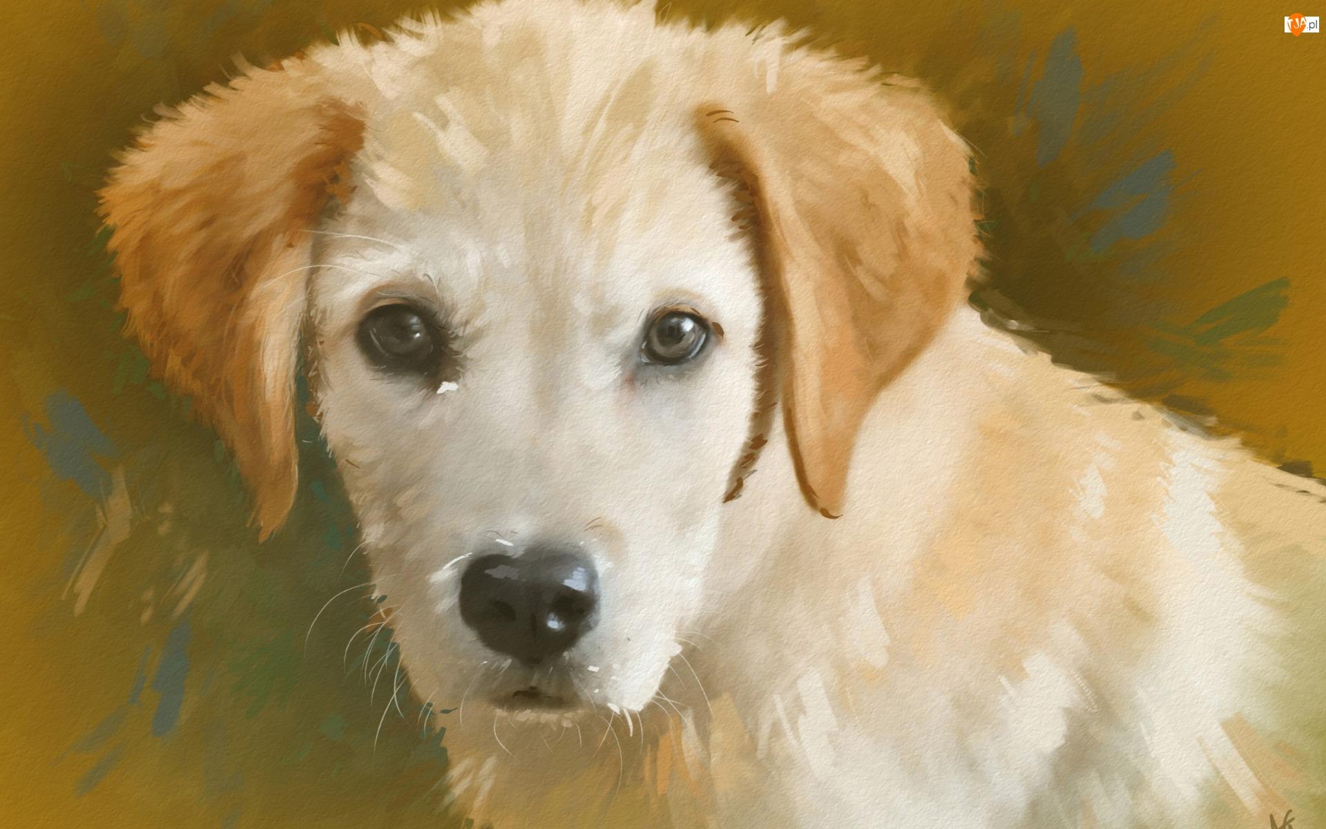 Portret, Pies, Szczeniak, Reprodukcja obrazu