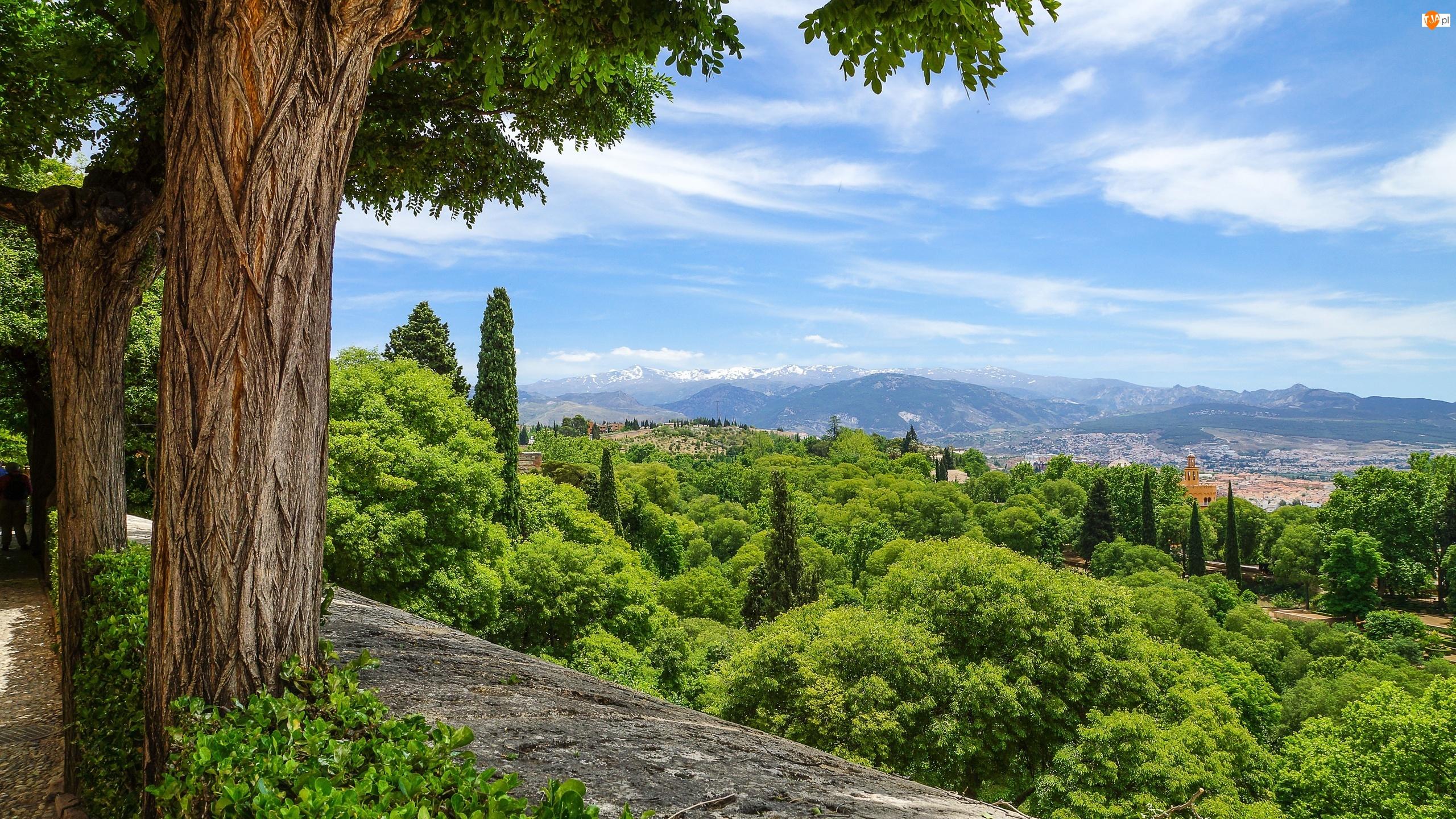Murek, Drzewa, Grenada, Hiszpania, Góry, Andaluzja