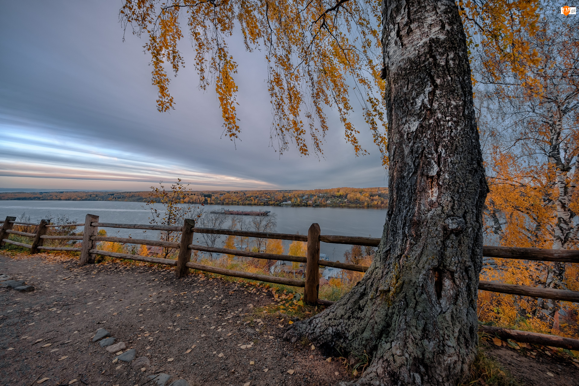 Brzoza, Drzewa, Rosja, Jesień, Rzeka Wołga, Ogrodzenie