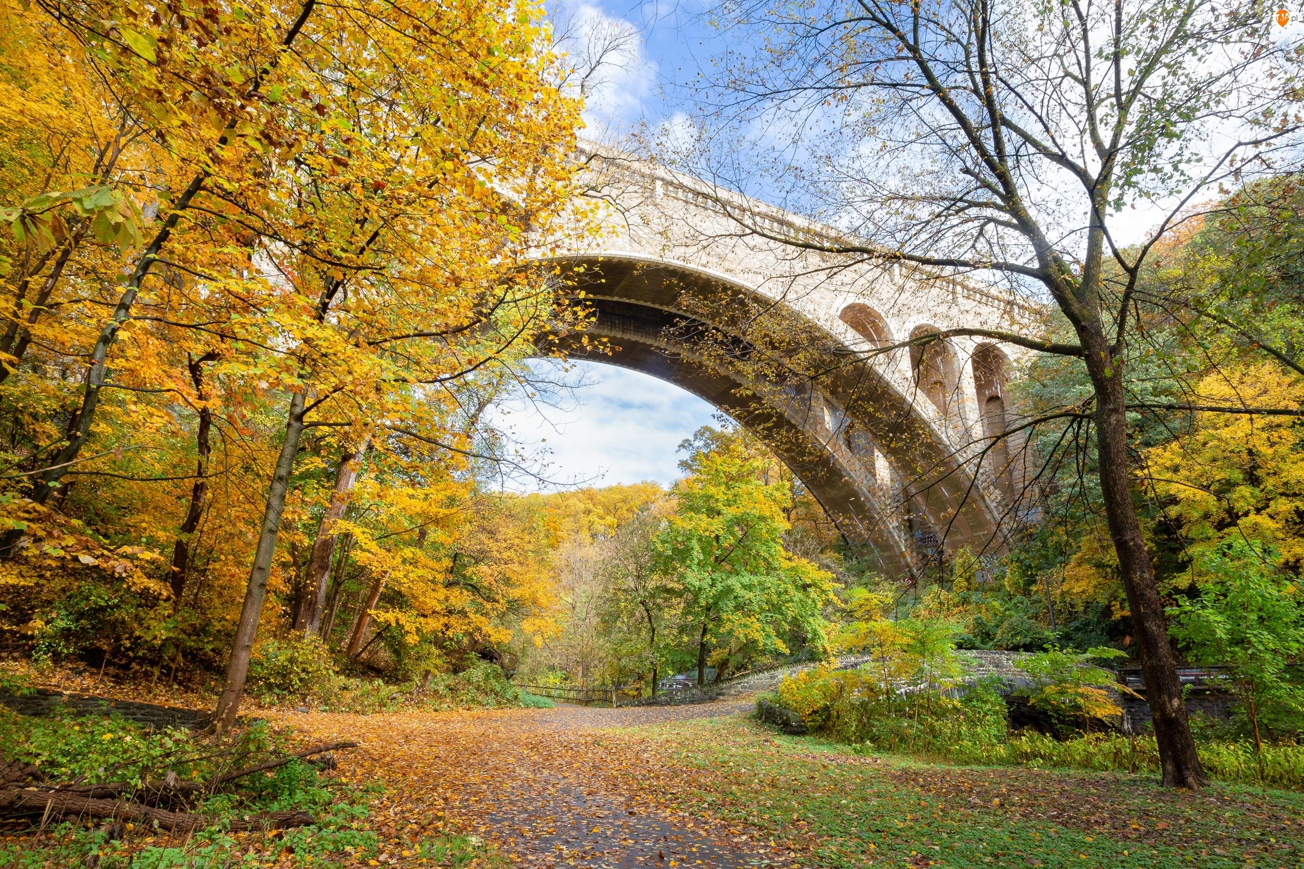 Henry Avenue Bridge, Drzewa, Stany Zjednoczone, Most, Stan Pensylwania, Filadelfia, Jesień