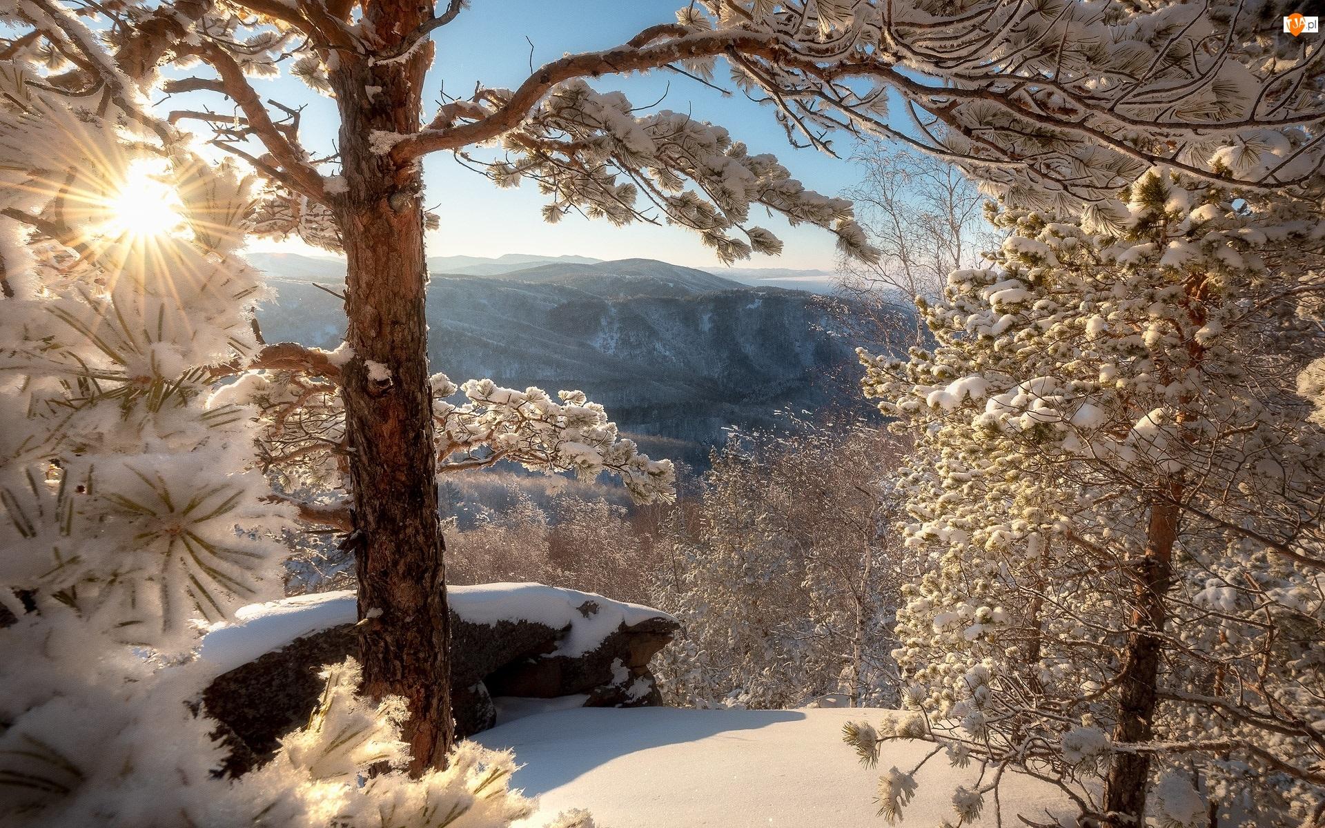 Drzewa, Słońce, Góry, Zima, Śnieg