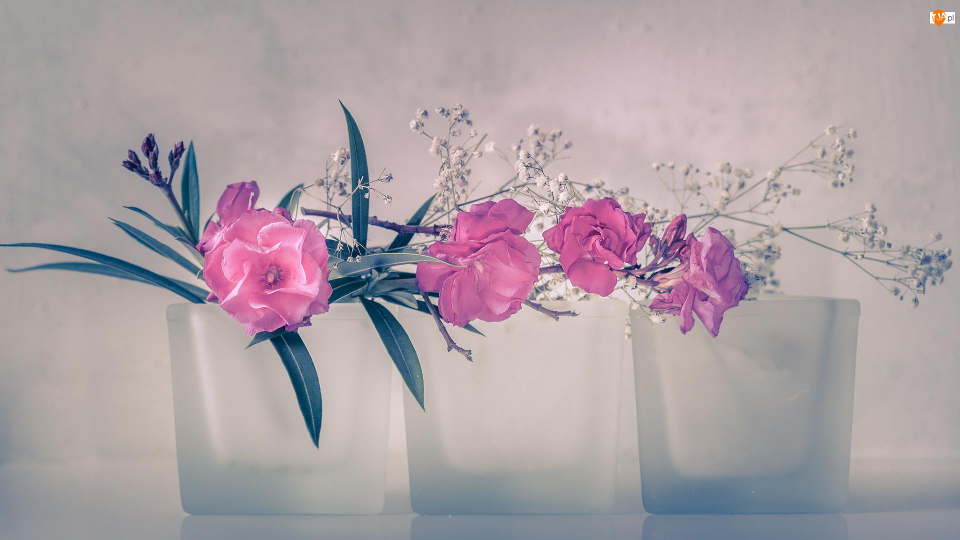 Szklanki, Różowe, Kwiaty, Trzy