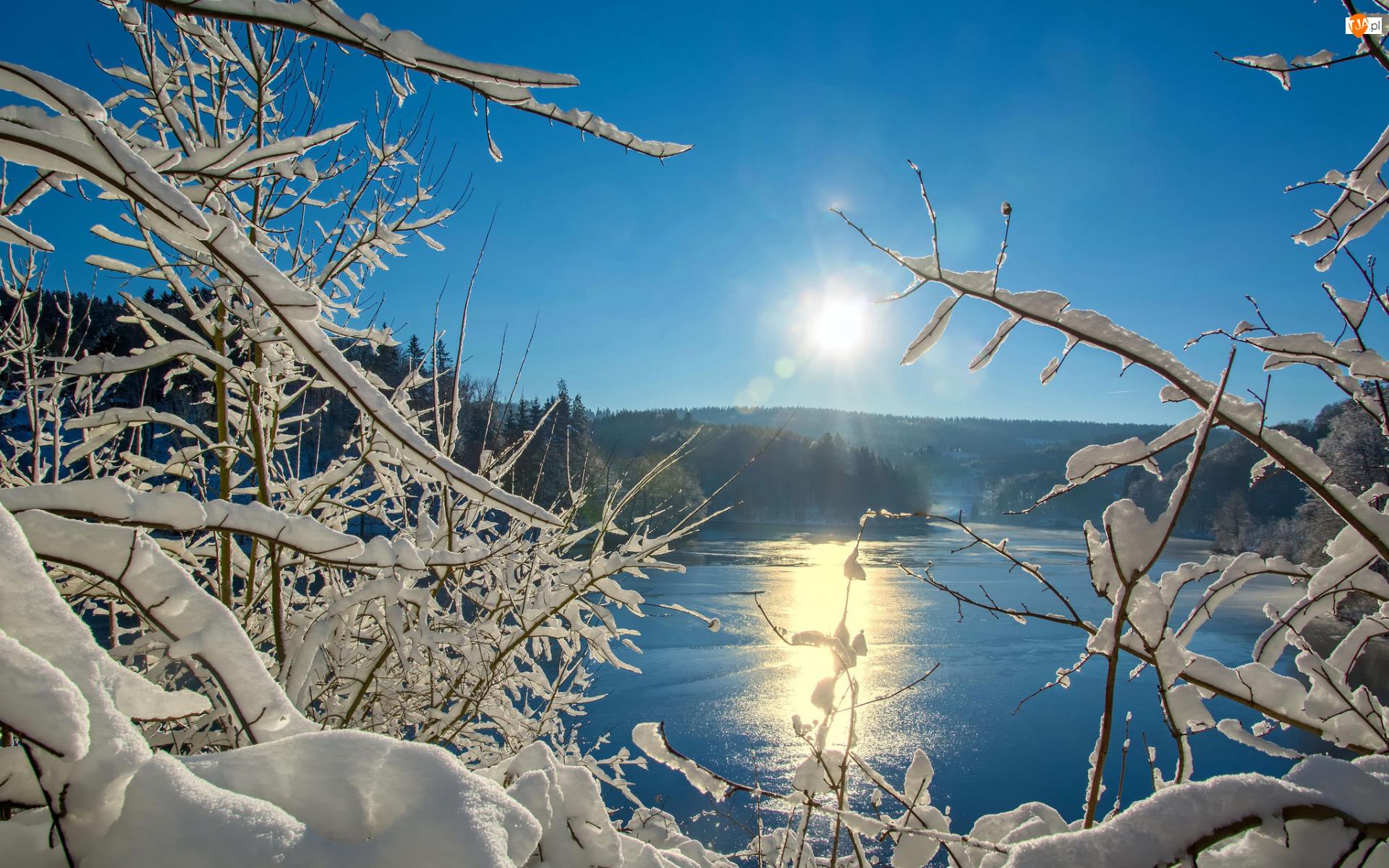 Lód, Zima, Gałęzie, Wschód słońca, Ośnieżone, Jezioro, Niebo, Drzewa