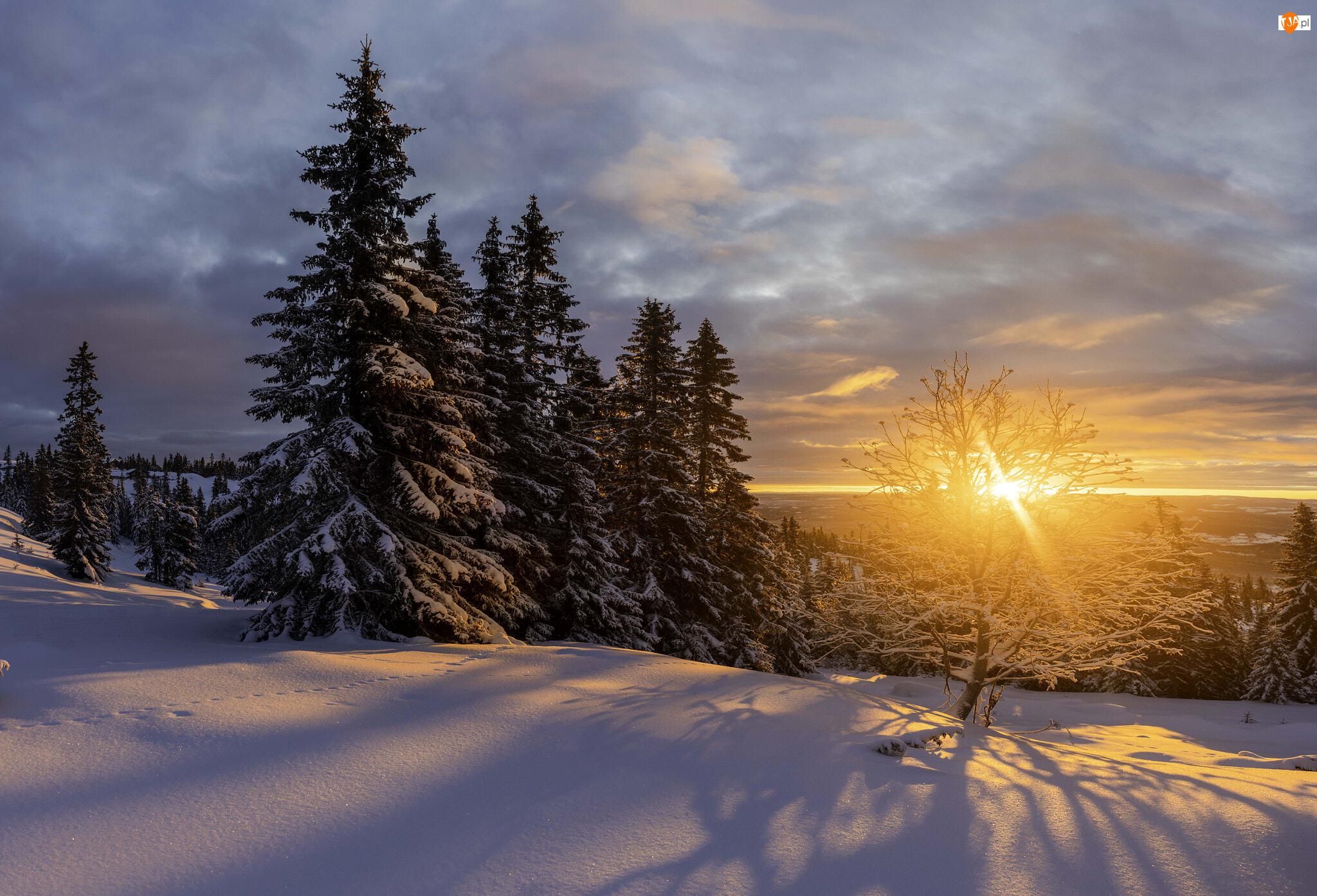 Drzewa, Chmury, Zachód słońca, Zima, Śnieg