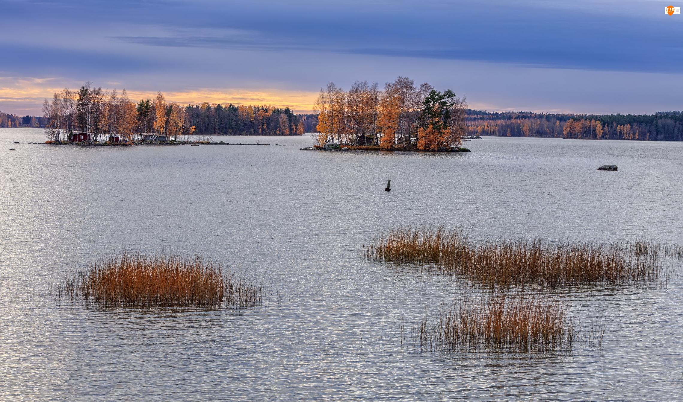 Drzewa, Jezioro, Trawy, Jesienne