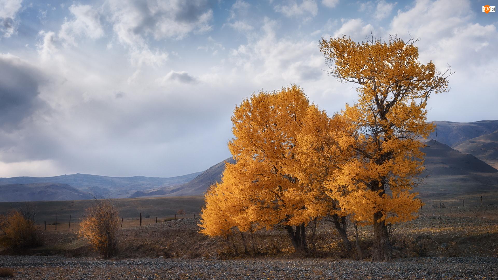 Góry, Jesienne, Drzewa, Topole