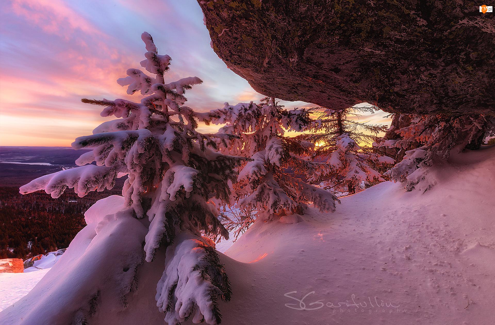 Śnieg, Skała, Drzewa, Zima, Świerki, Ośnieżone, Wschód słońca
