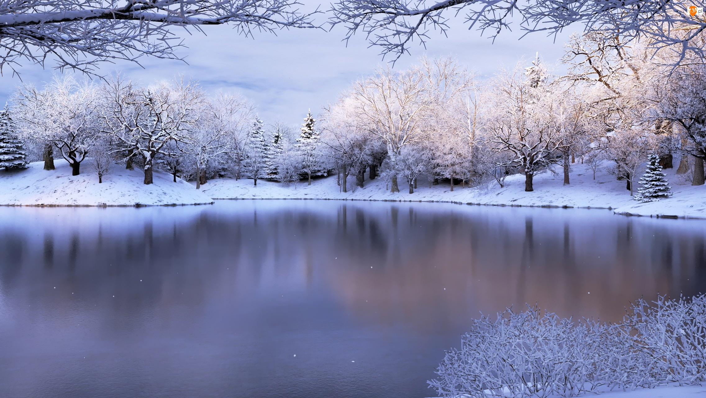 Ośnieżone, Zima, Jezioro, Krzew, Drzewa, Gałęzie
