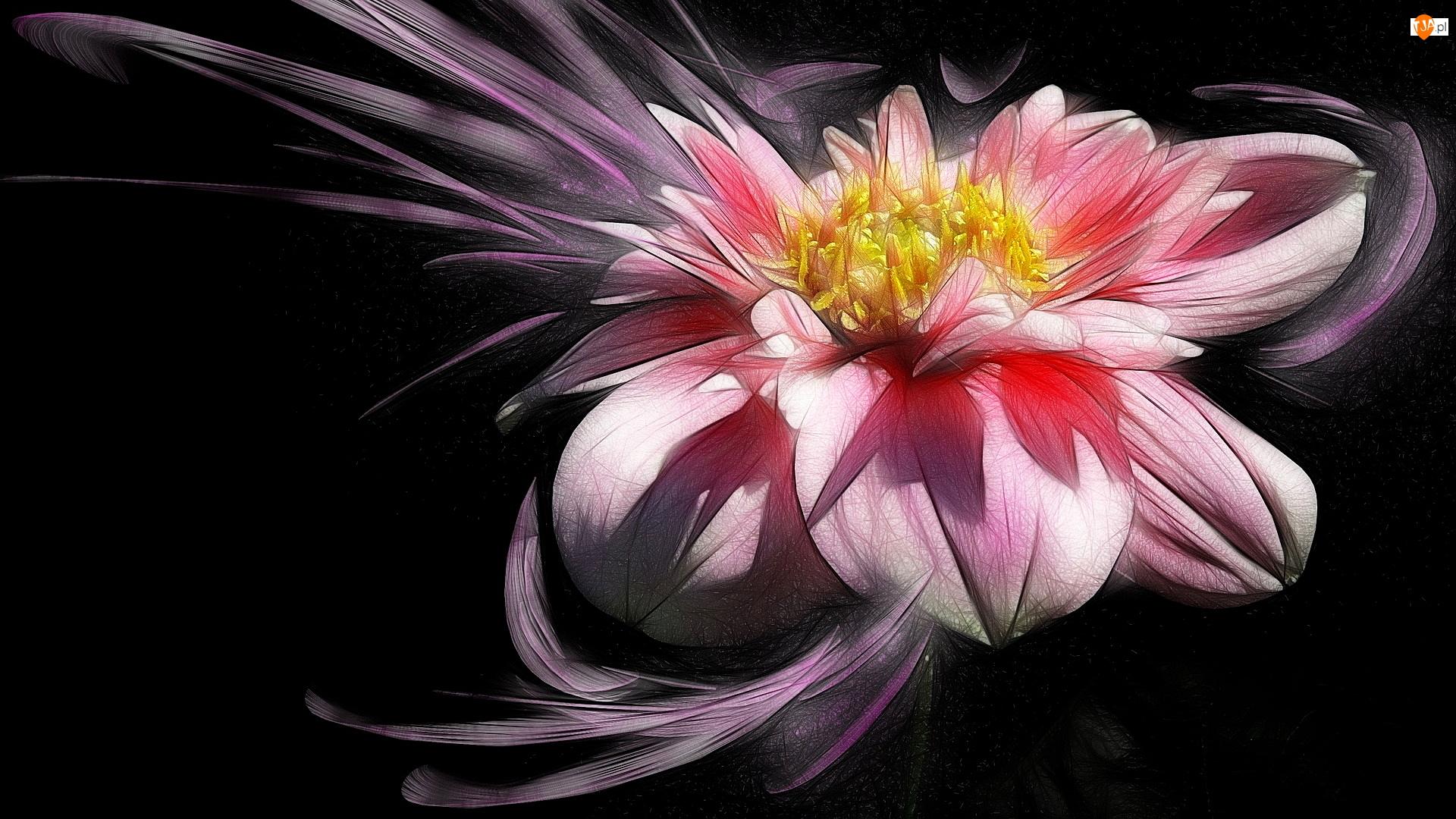 Różowa, Kwiat, Grafika, Tło, Dalia, Ciemne