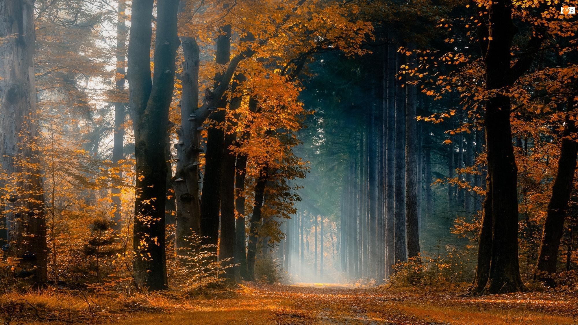Drzewa, Jesień, Droga, Las, Promienie słońca