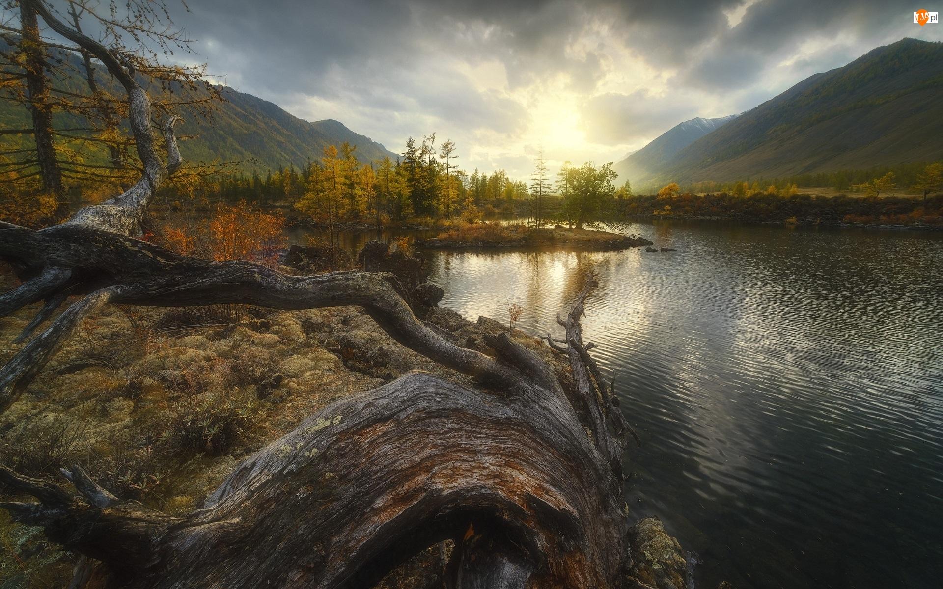 Jesień, Las, Konar, Góry, Syberia, Rosja, Buriacja, Tajga, Rzeka Oka, Drzewa