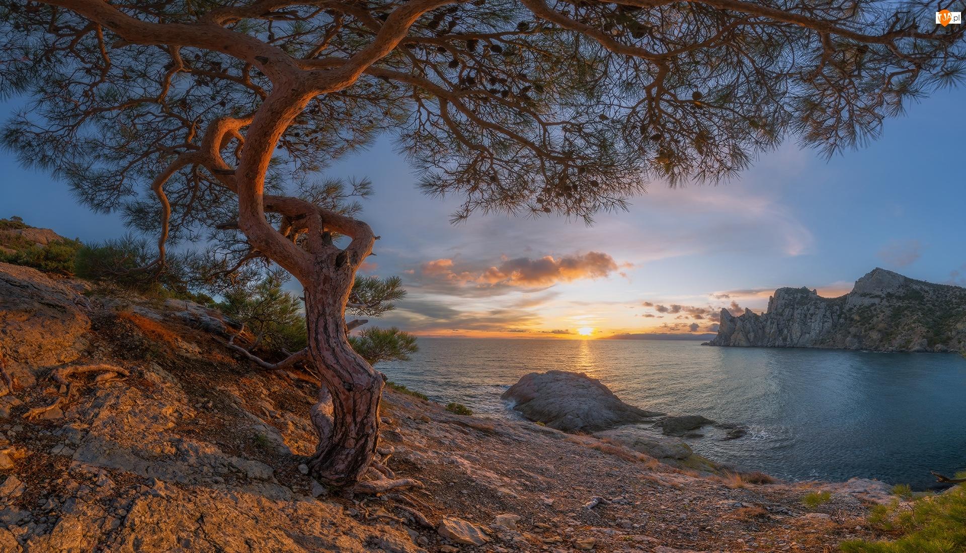 Drzewo, Morze Czarne, Wybrzeże, Sosna, Wschód słońca, Skały, Krym, Chmury