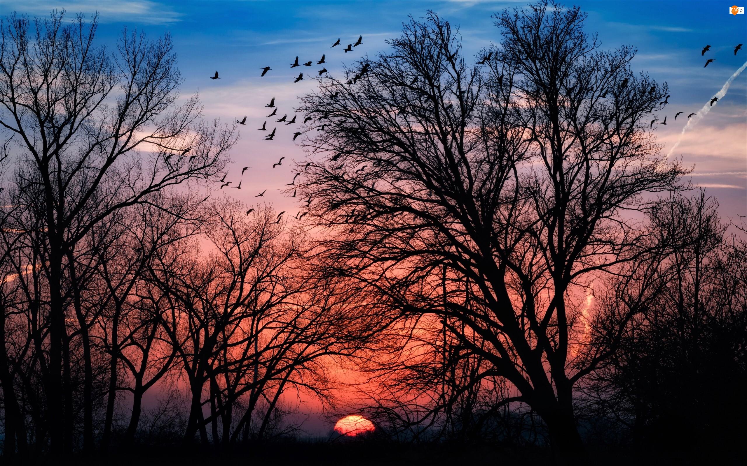 Drzewa, Zachód słońca, Ptaki