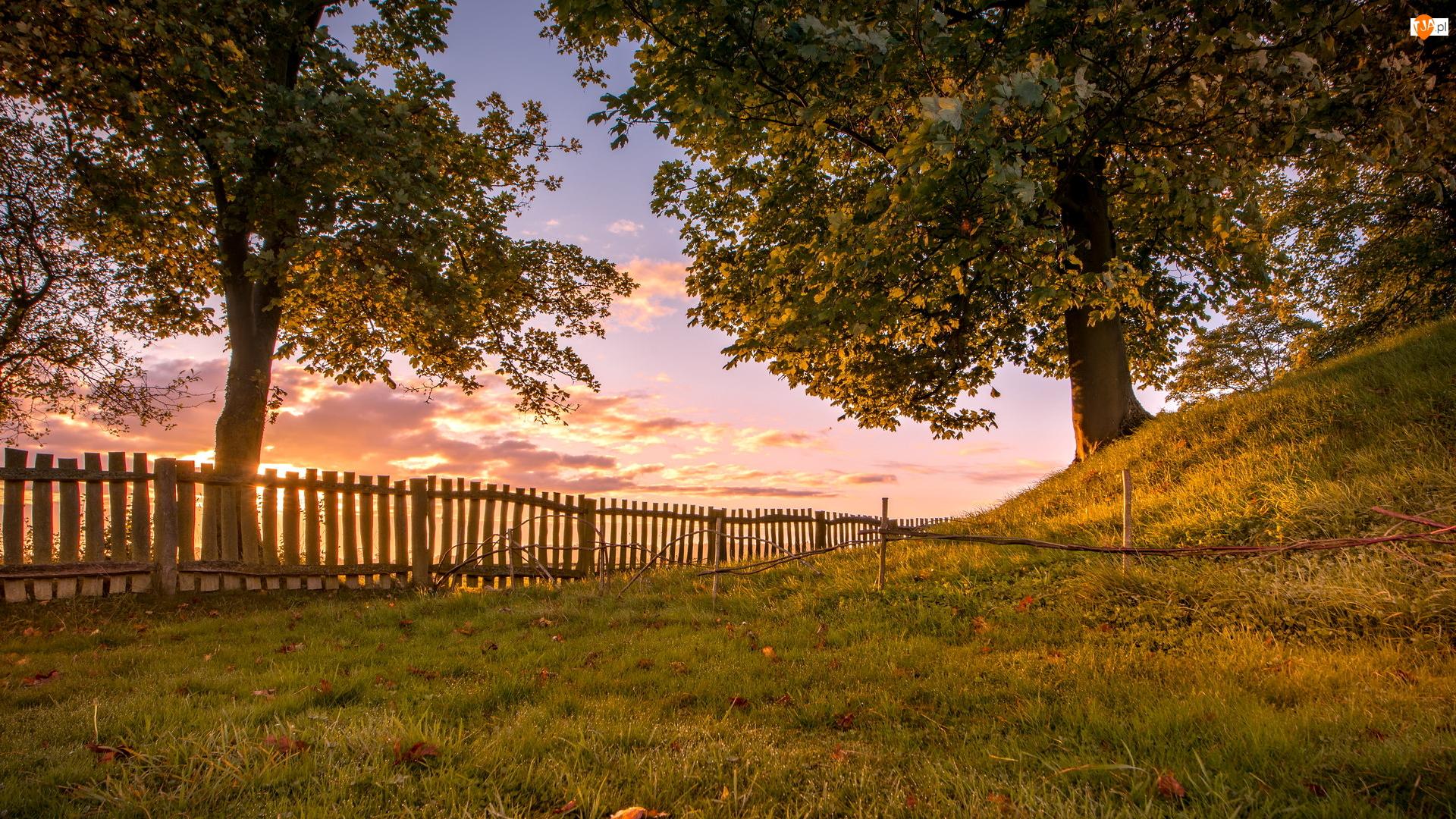 Wzgórze, Drzewa, Ogrodzenie, Wschód słońca, Płot, Trawa