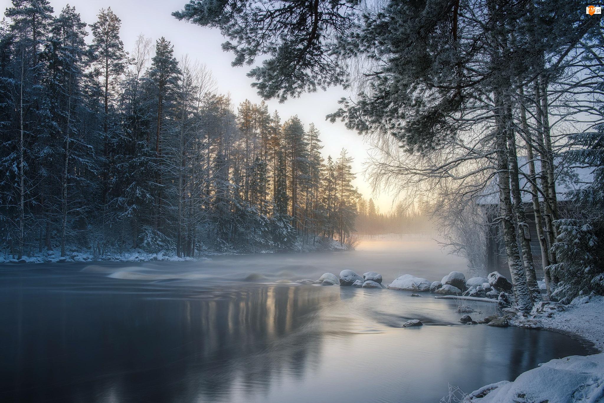 Las, Wschód słońca, Rzeka, Zima, Drzewa