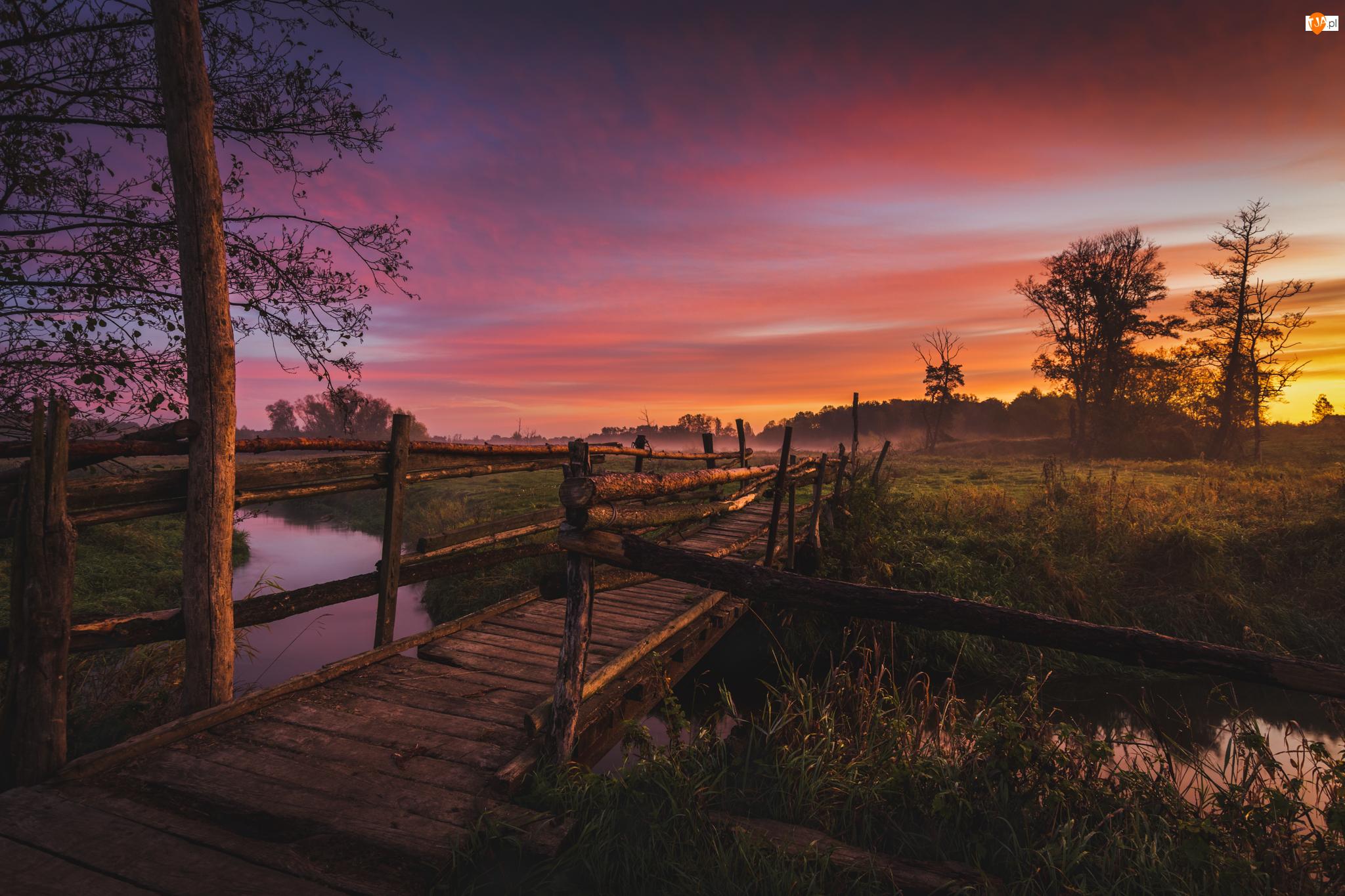 Drzewa, Wschód słońca, Rzeka, Most