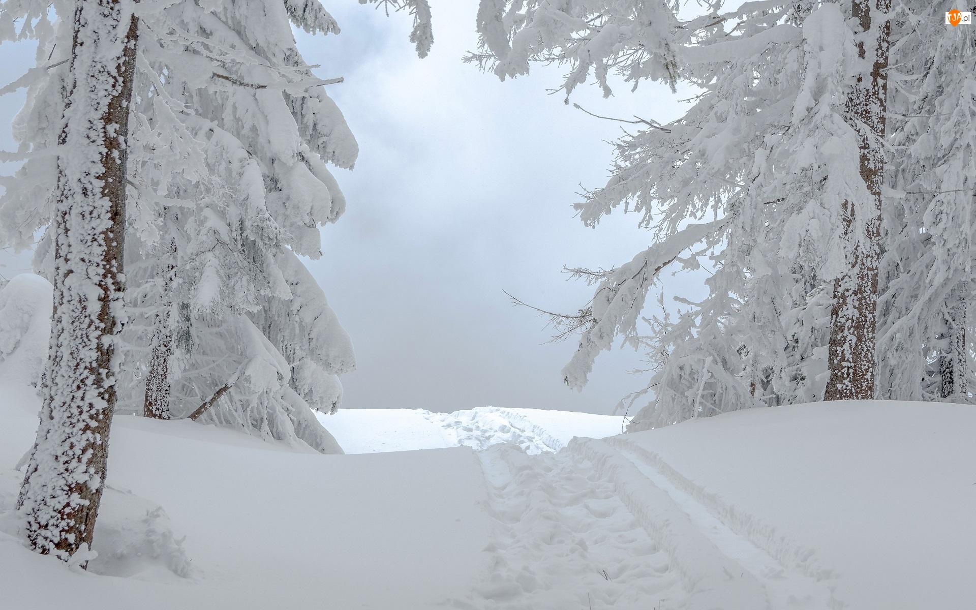 Drzewa, Ścieżka, Ośnieżone, Zima, Koleiny