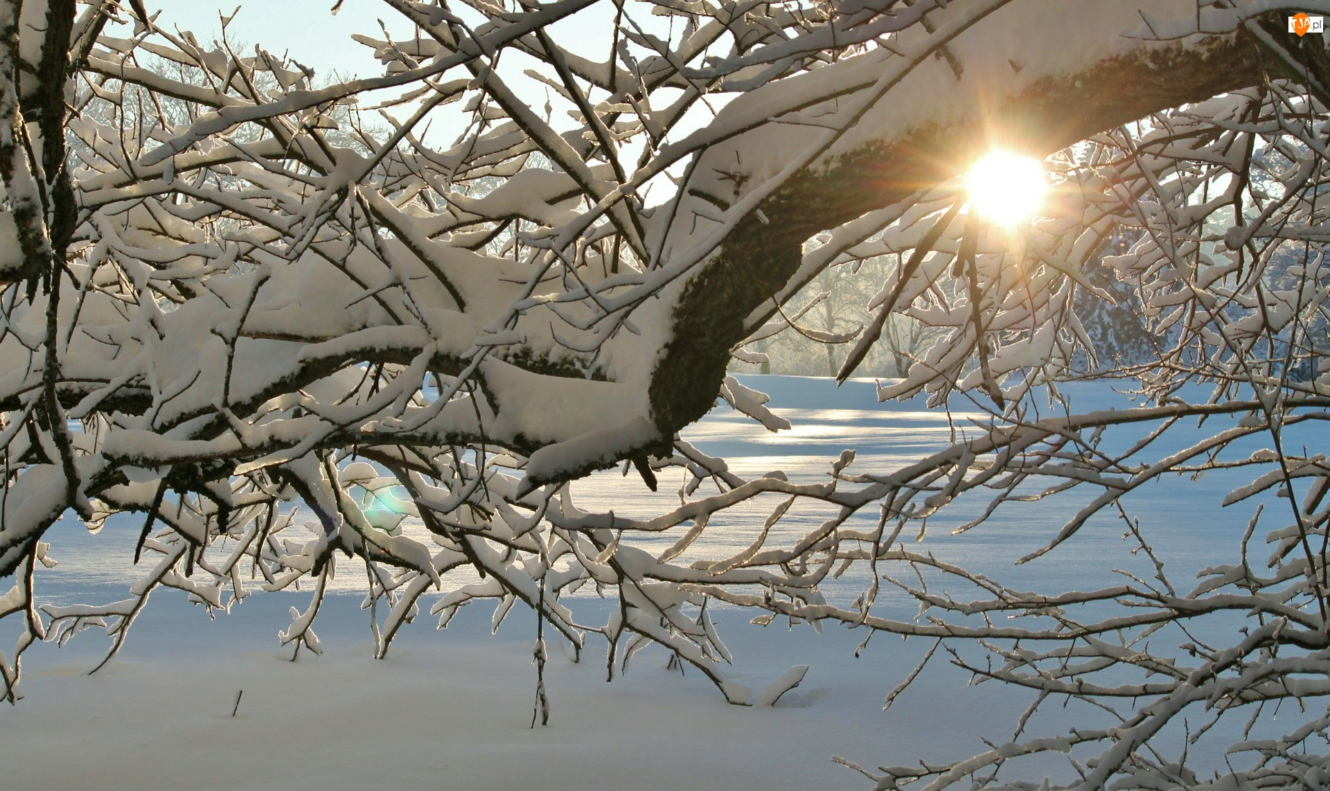 Śnieg, Zima, Słońce, Gałęzie, Drzewo, Ośnieżone