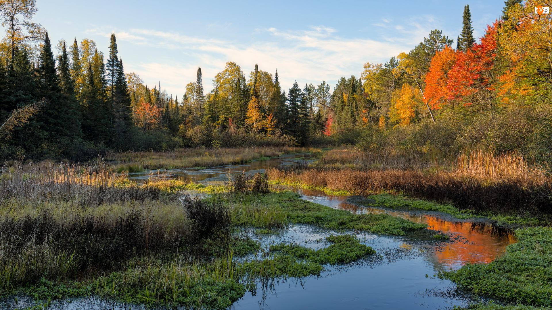 Drzewa, Jesień, Mokradła, Rzeka, Las