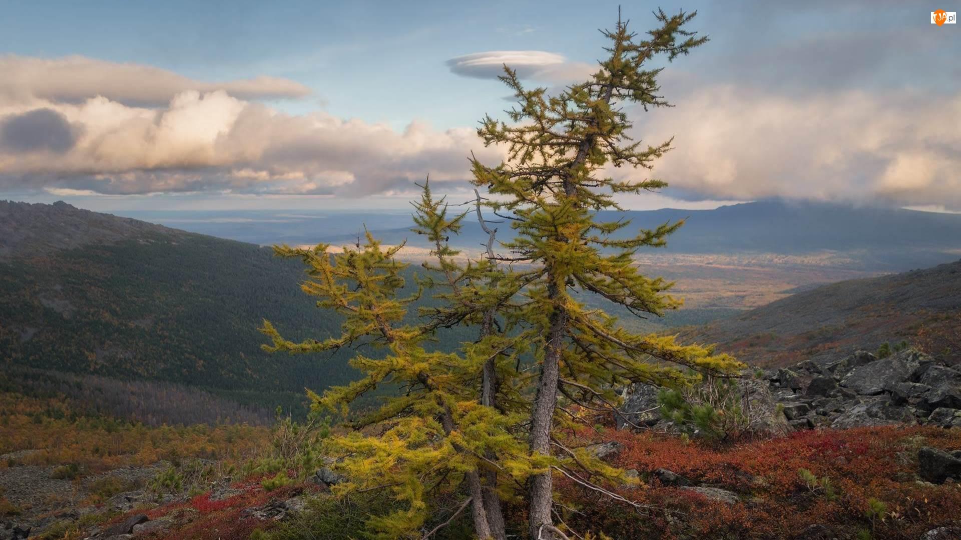 Drzewo, Krzewy, Góry, Jesień, Modrzew