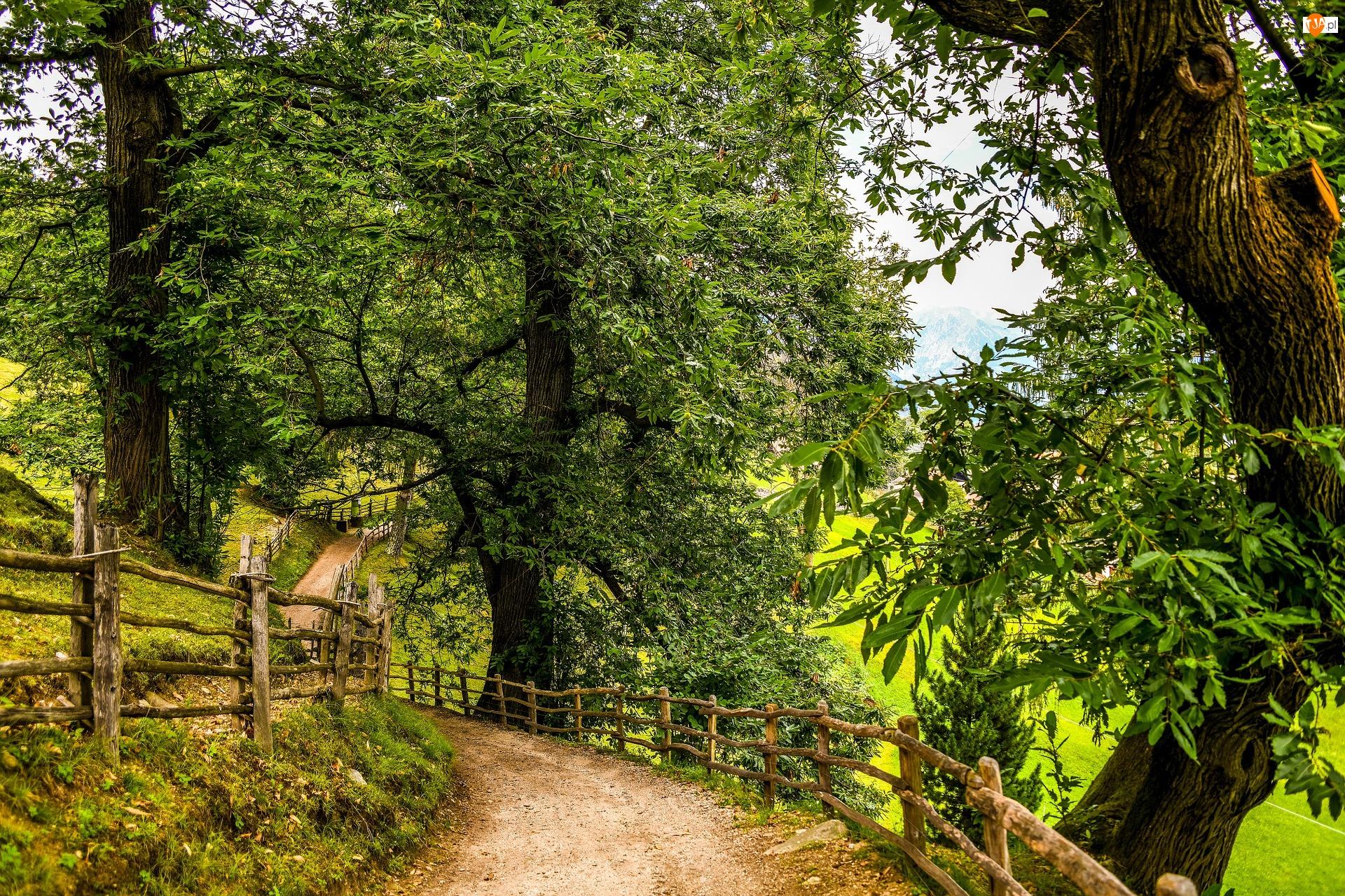 Drzewa, Zielone, Płot, Lato, Droga, Ogrodzenie