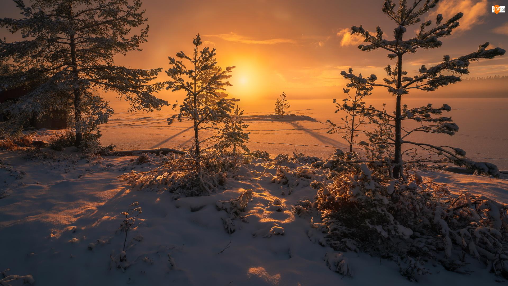 Drzewa, Zachód słońca, Zaśnieżone, Ringerike, Zima, Jezioro, Norwegia, Śnieg