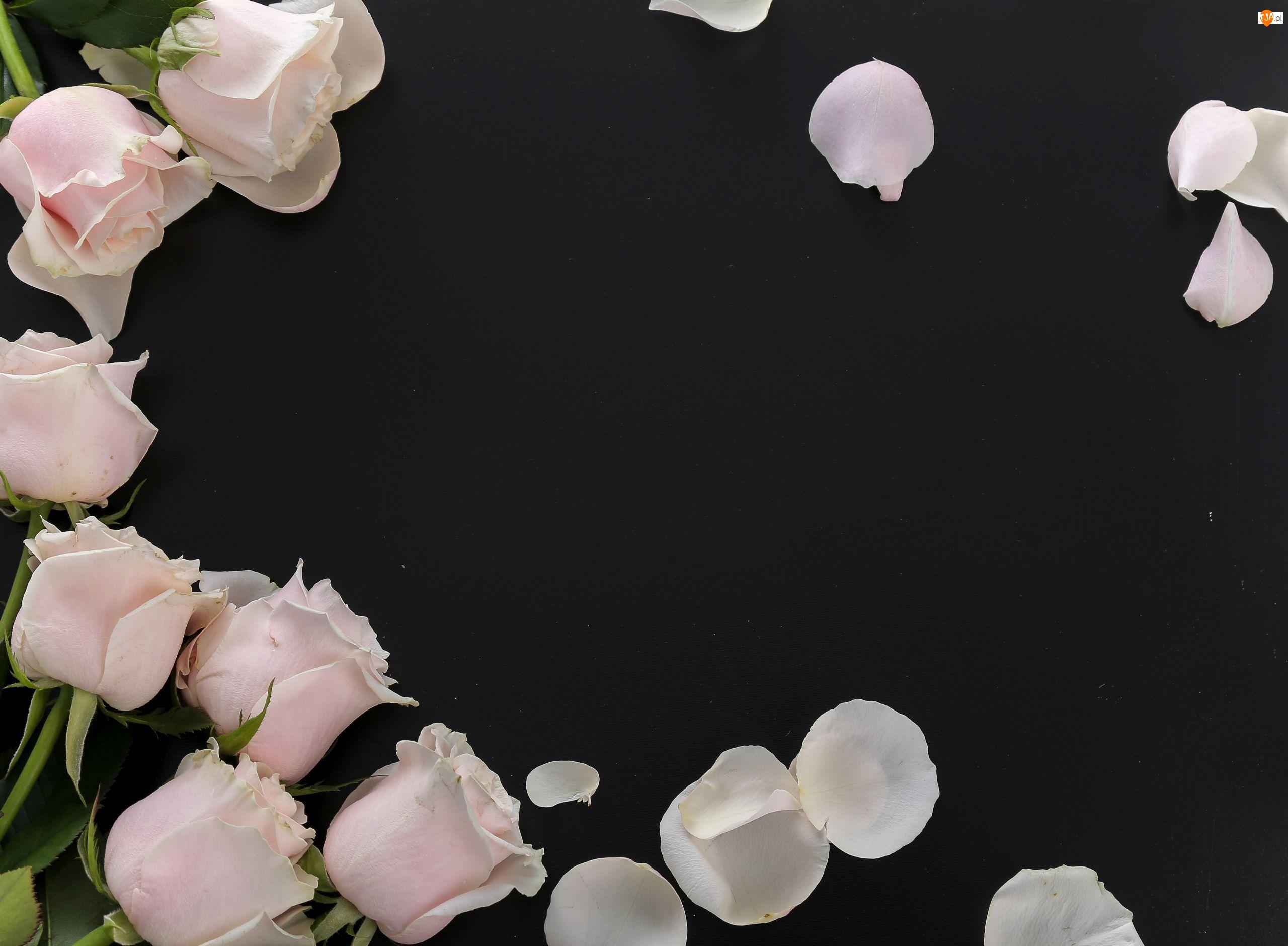 Różowe, Kwiaty, Płatki, Tło, Róże, Czarne
