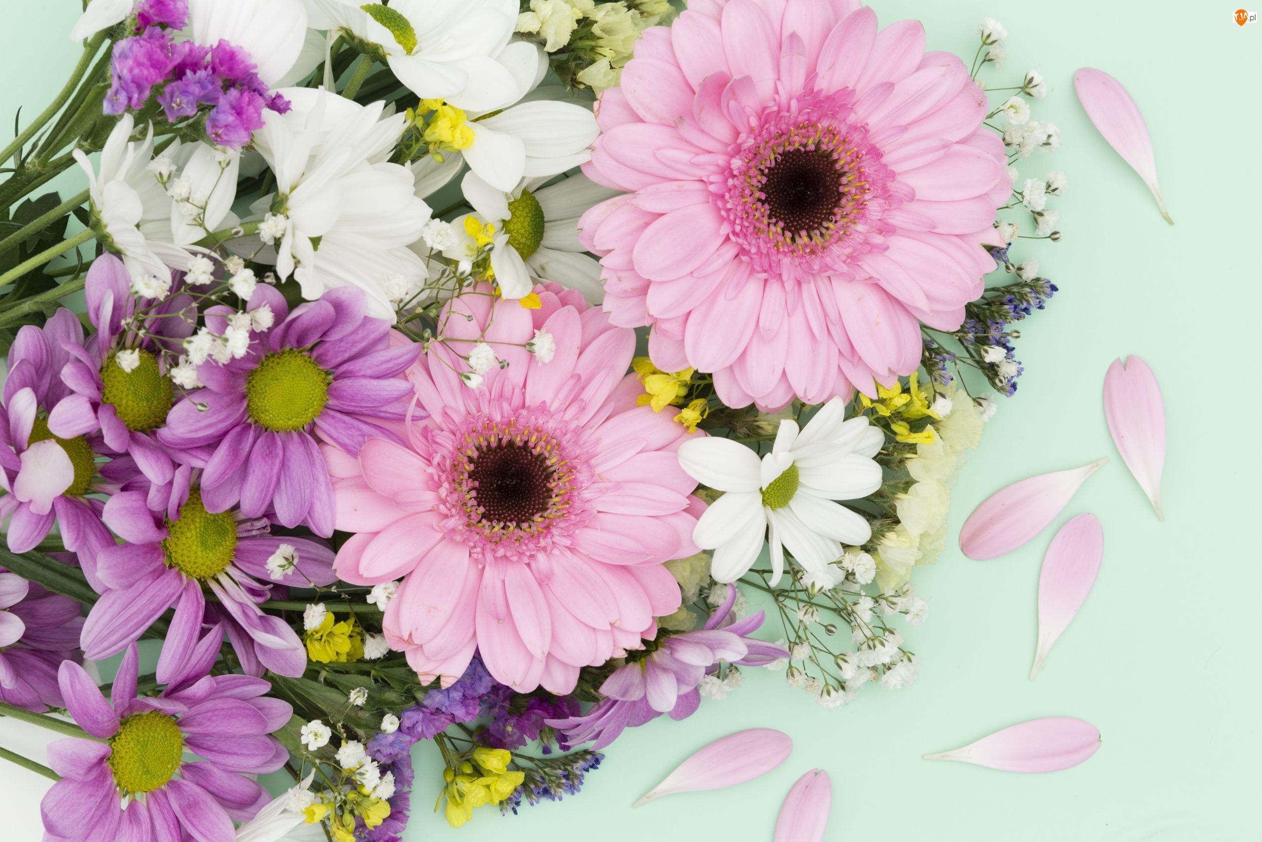Gerbery, Kwiaty, Kolorowe, Chryzantemy