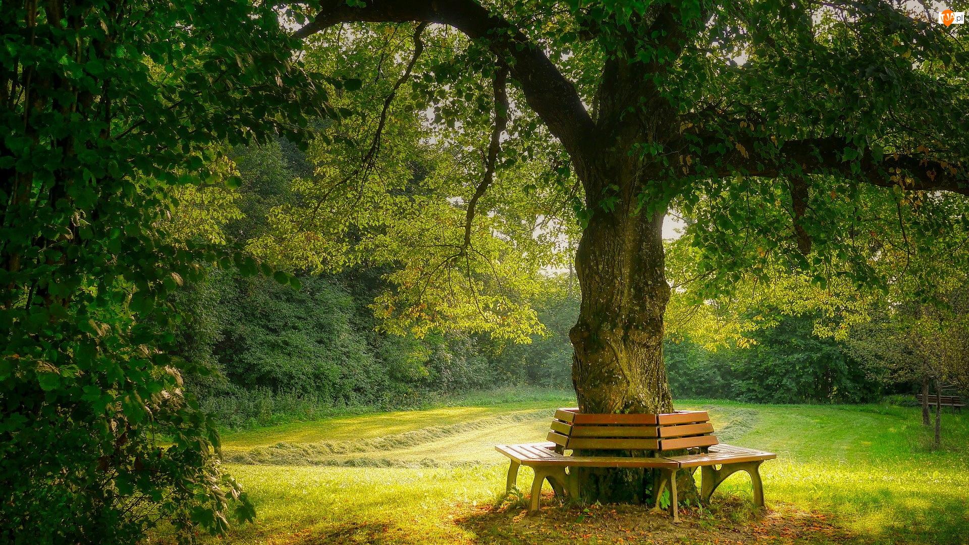 Drewniane, Park, Lato, Drzewo, Ławki