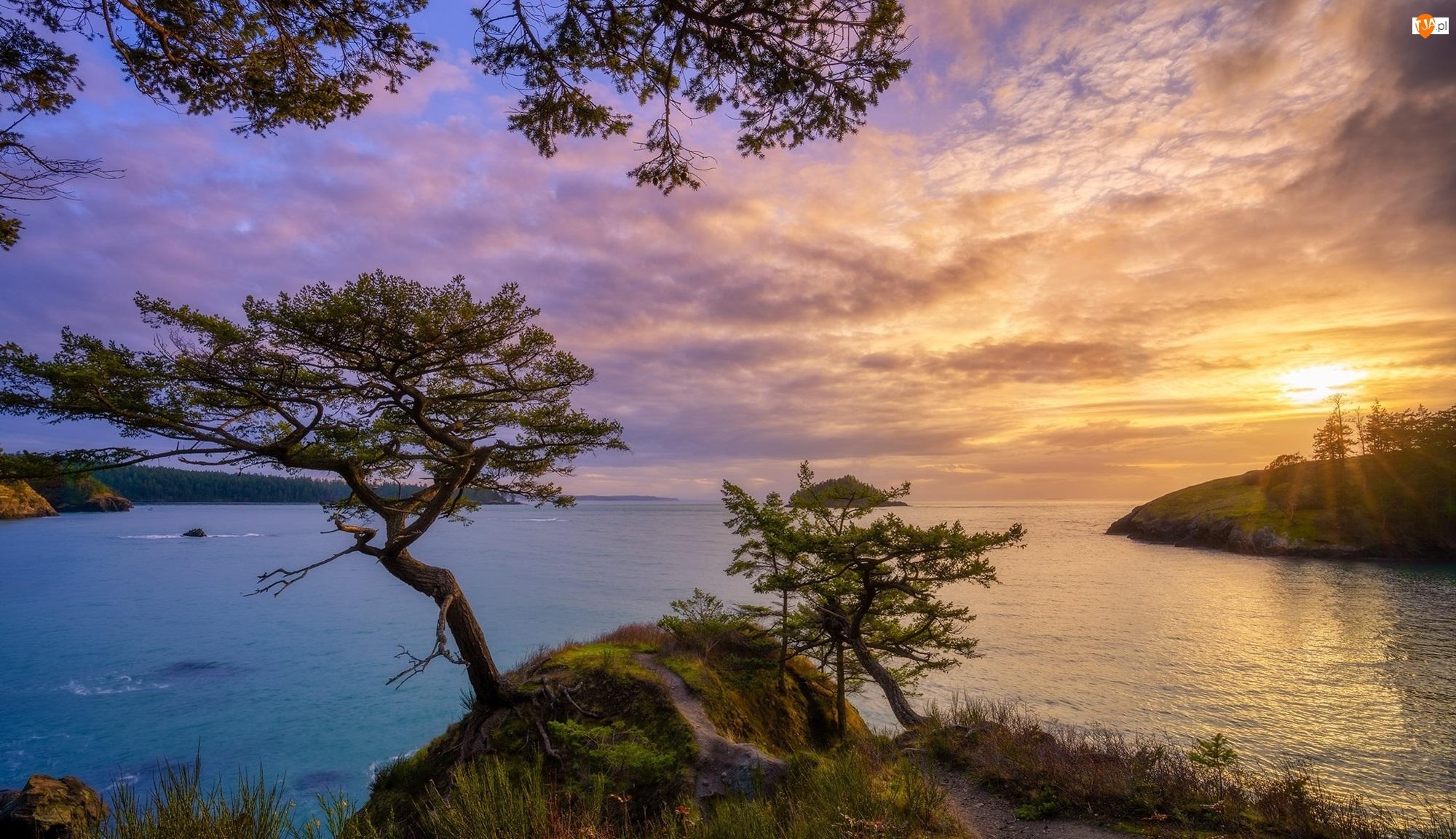 Chmury, Morze, Zachód słońca, Drzewa, Skała