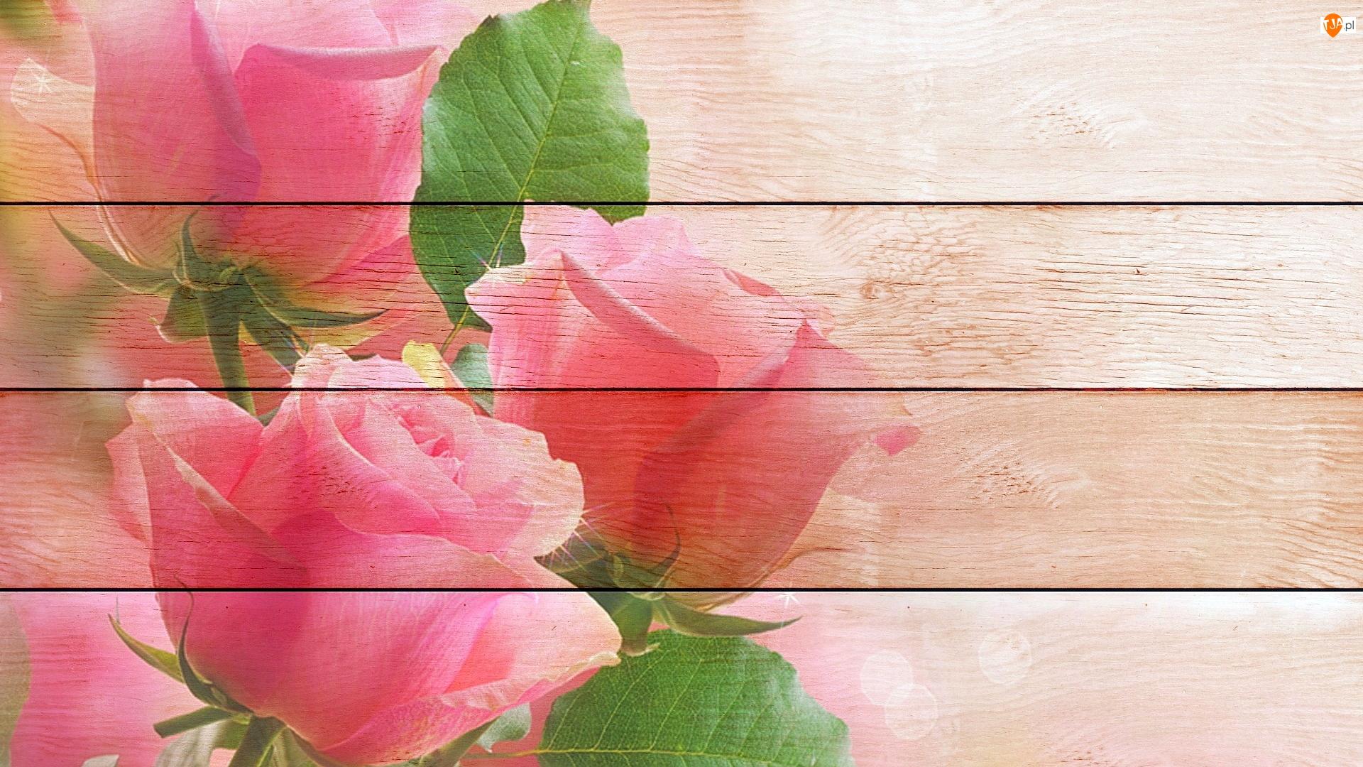 Grafika, Deski, Trzy, Róże