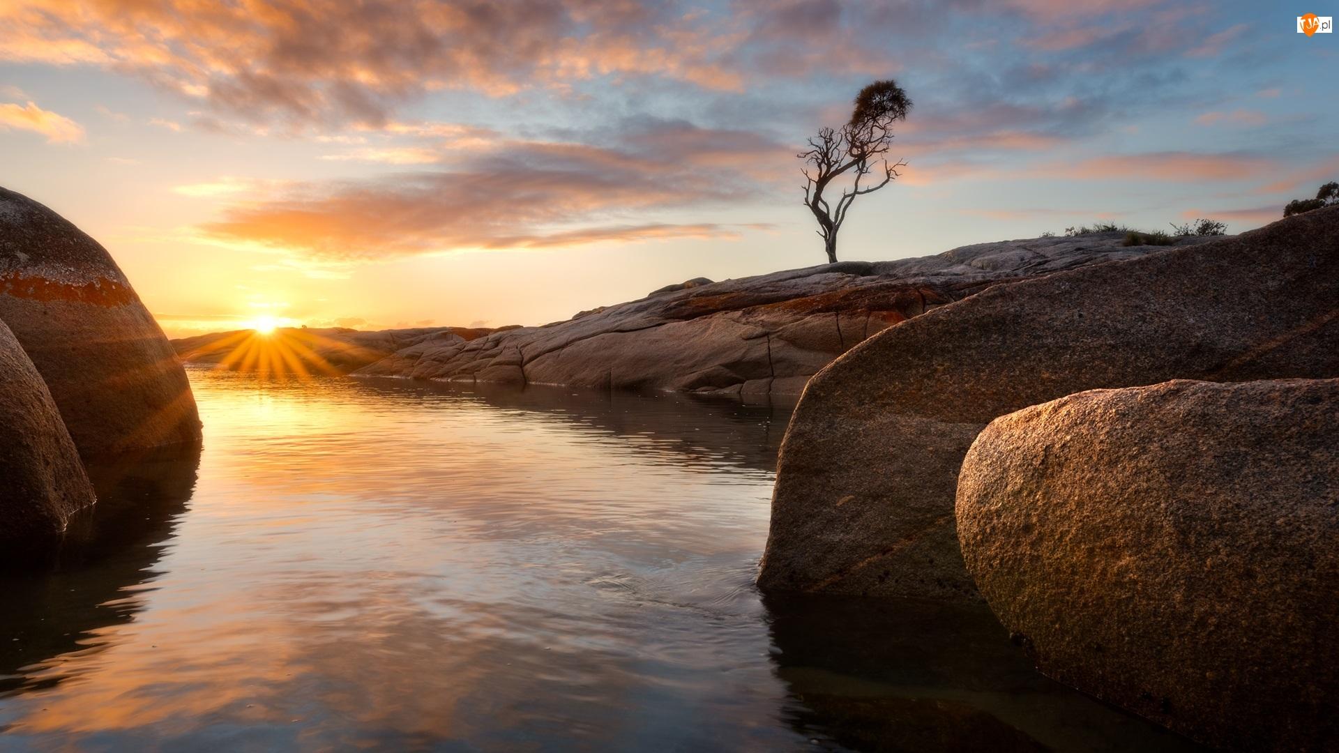 Drzewo, Australia, Morze, Wschód słońca, Tasmania, Skały, Chmury, Binalong Bay