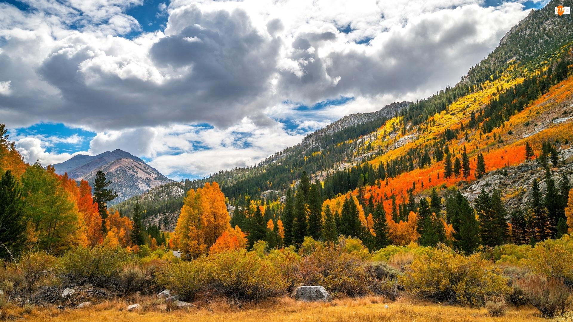 Lasy, Chmury, Drzewa, Góry, Jesień