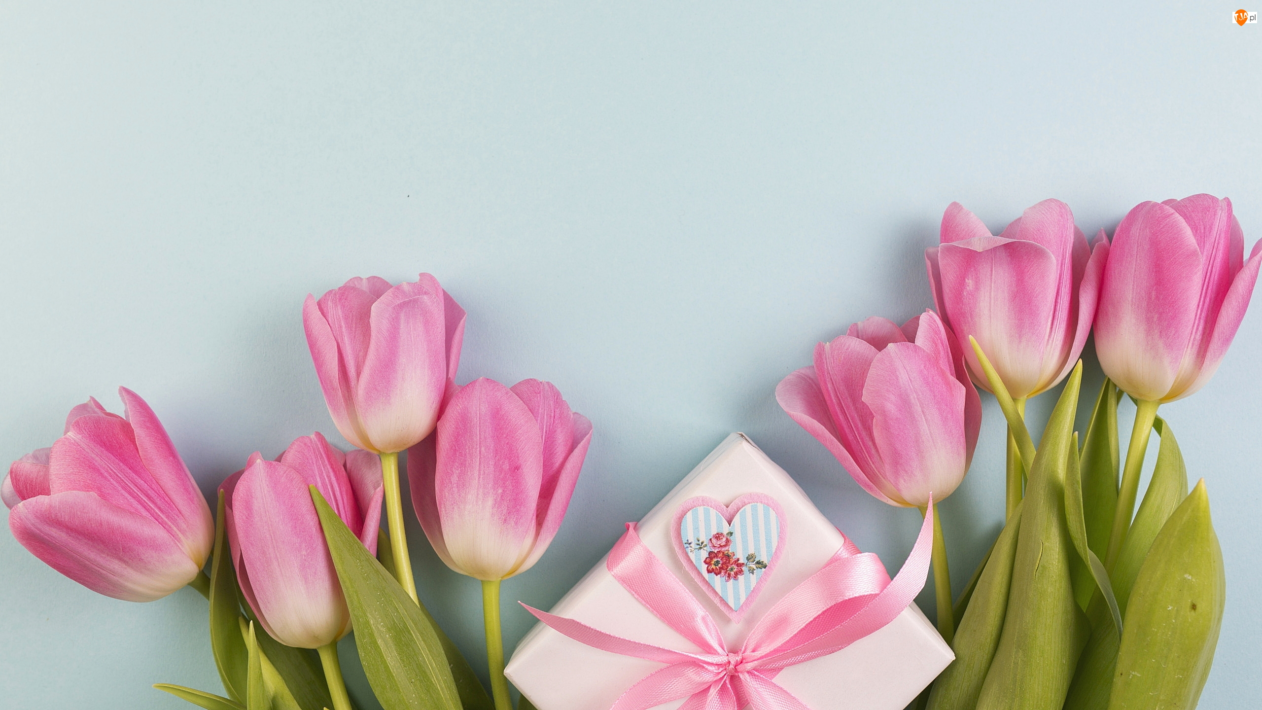 Tło, Prezent, Tulipany, Niebieskie