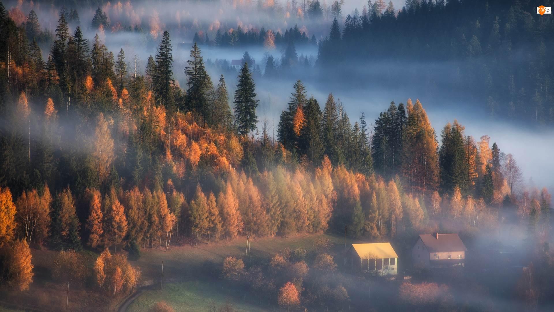 Domy, Jesień, Las, Mgła