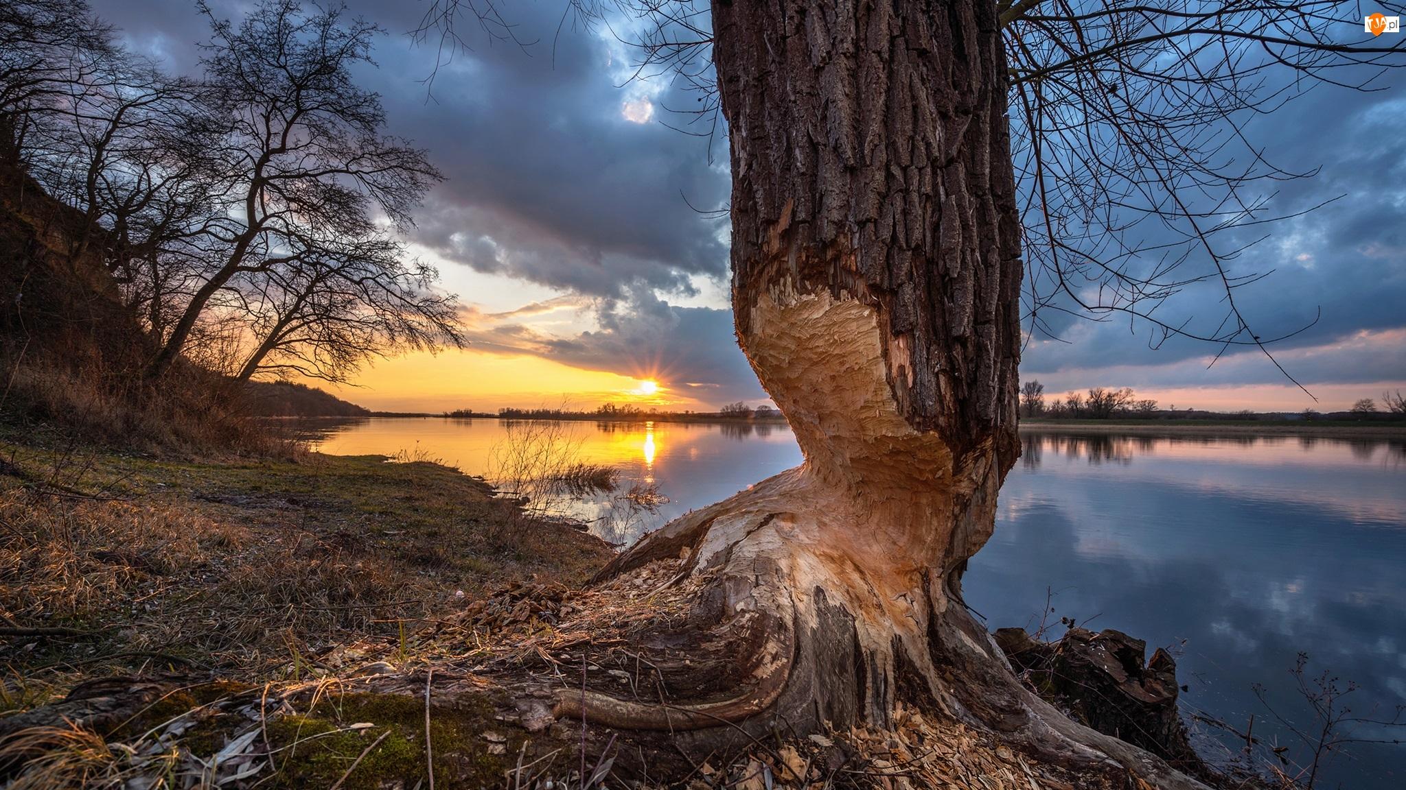 Drzewo, Zachód słońca, Nadgryzione, Rzeka, Chmury