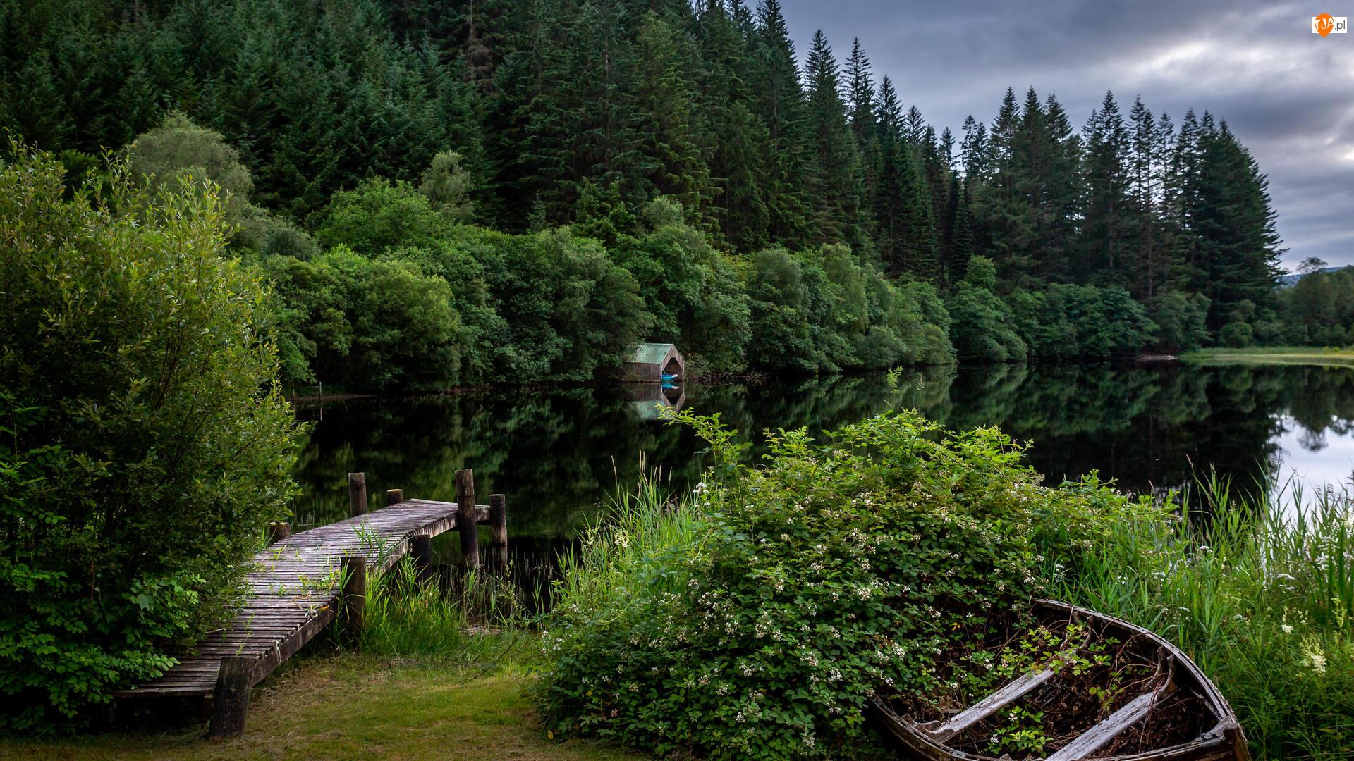 Las, Pomost, Kwiaty, Jezioro, Krzewy, Drzewa, Łódka