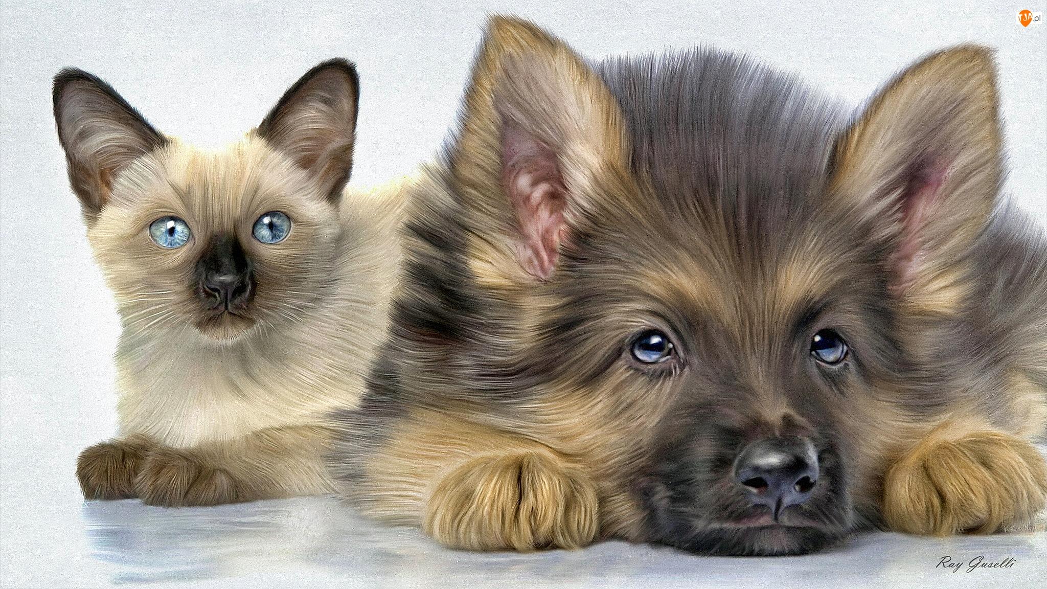 Szczeniak, Grafika, Pies, Kot syjamski, Owczarek niemiecki