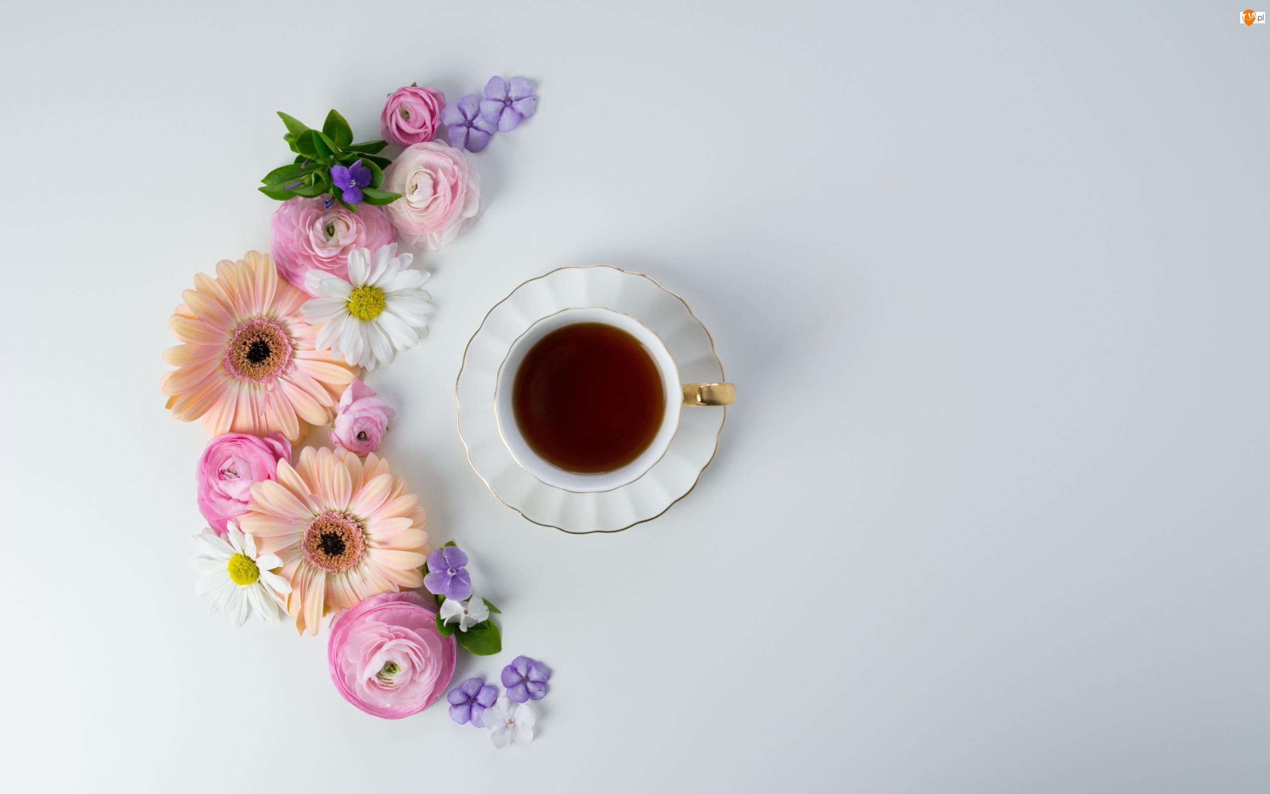 Kwiaty, Jaskry, Filiżanka, Herbata, Gerbery