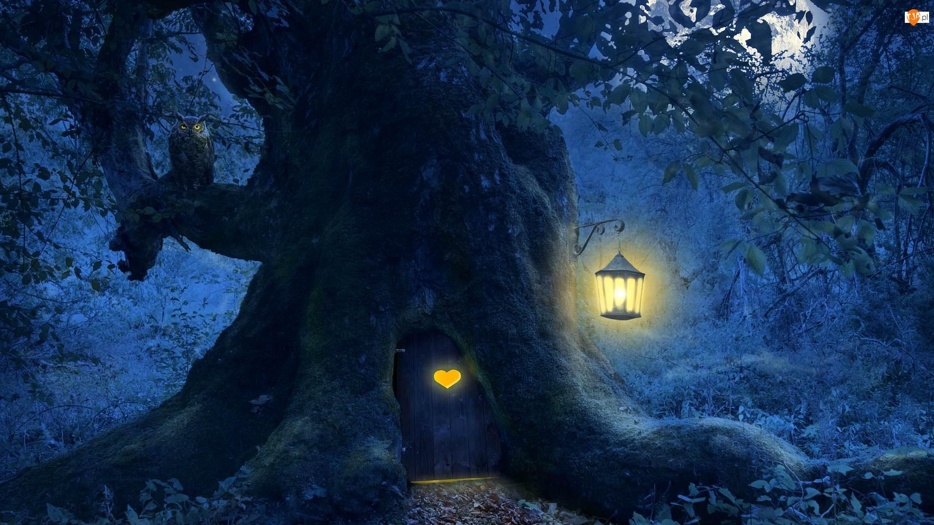 Drzewo, Noc, Sowa, 2D, Drzwi, Lampion