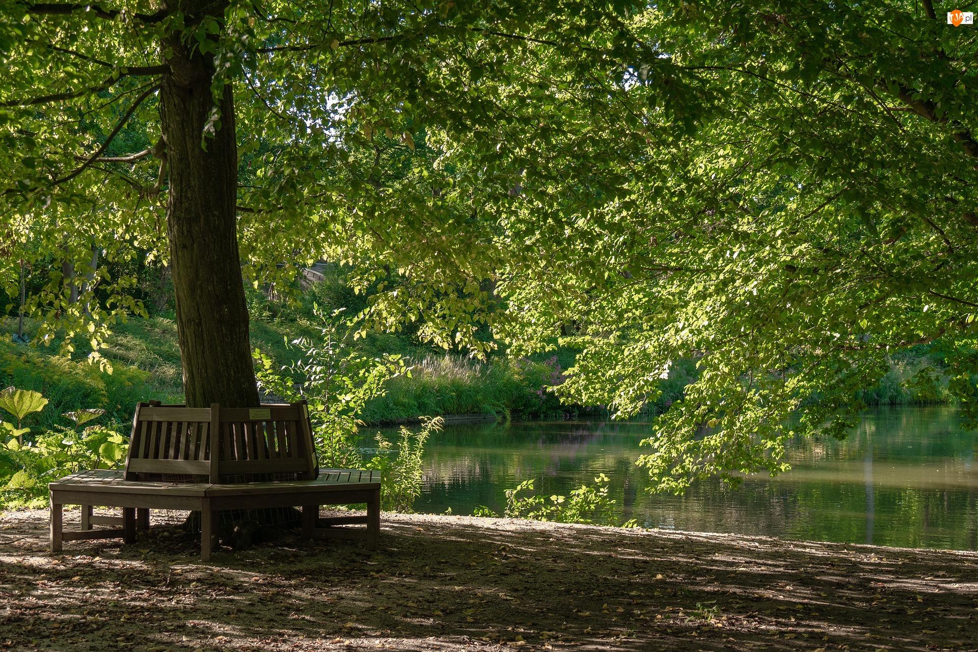 Staw, Ławki, Drzewa, Park