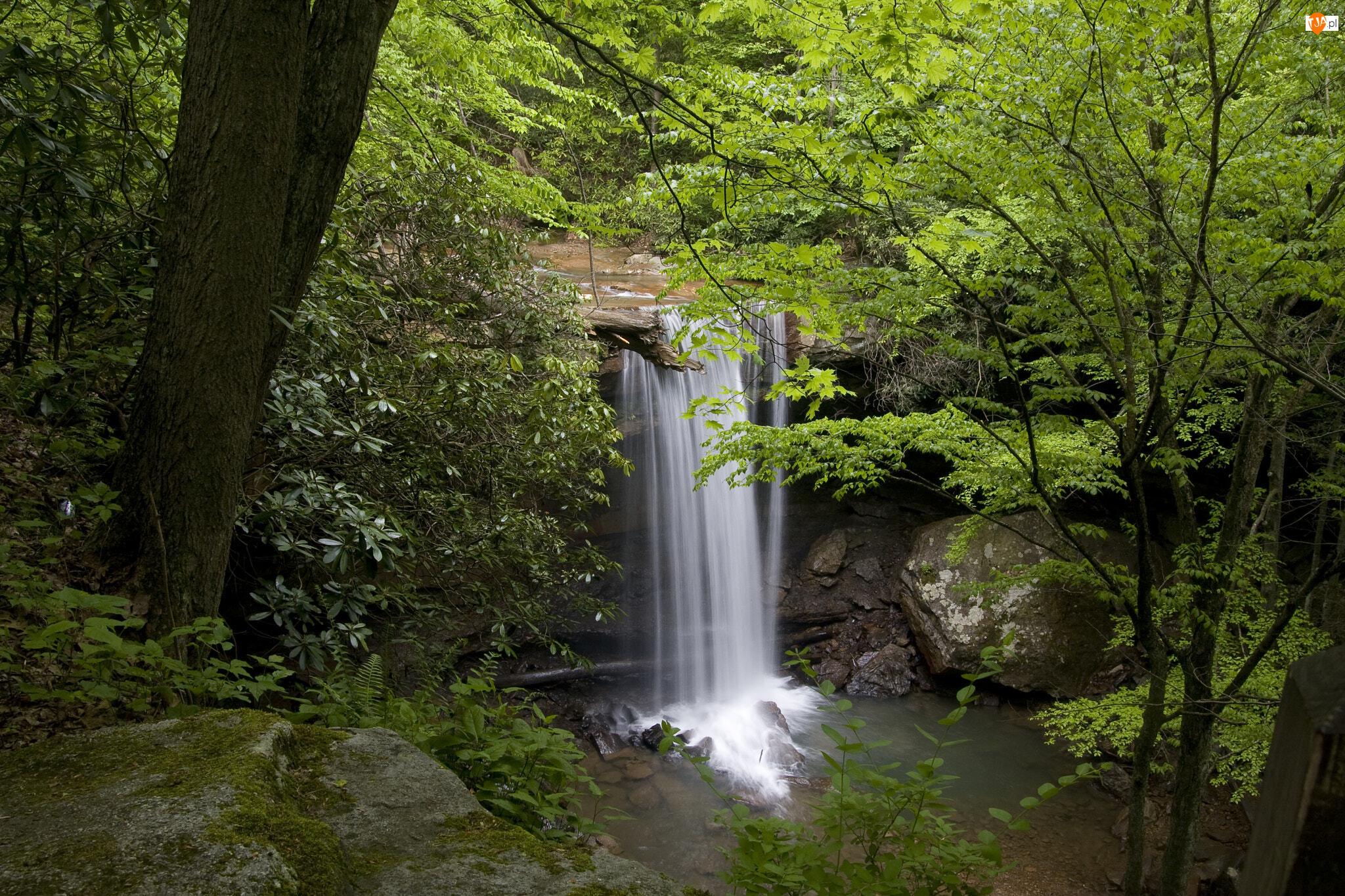 Rzeka, Wodospad, Drzewa, Kamienie, Rośliny, Las