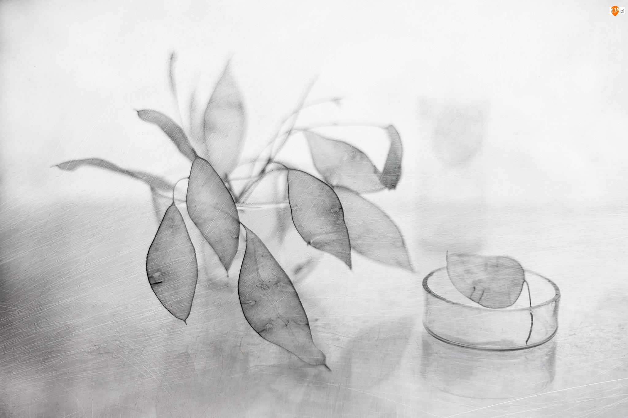Grafika, Miesiącznica, Suche, Rośliny