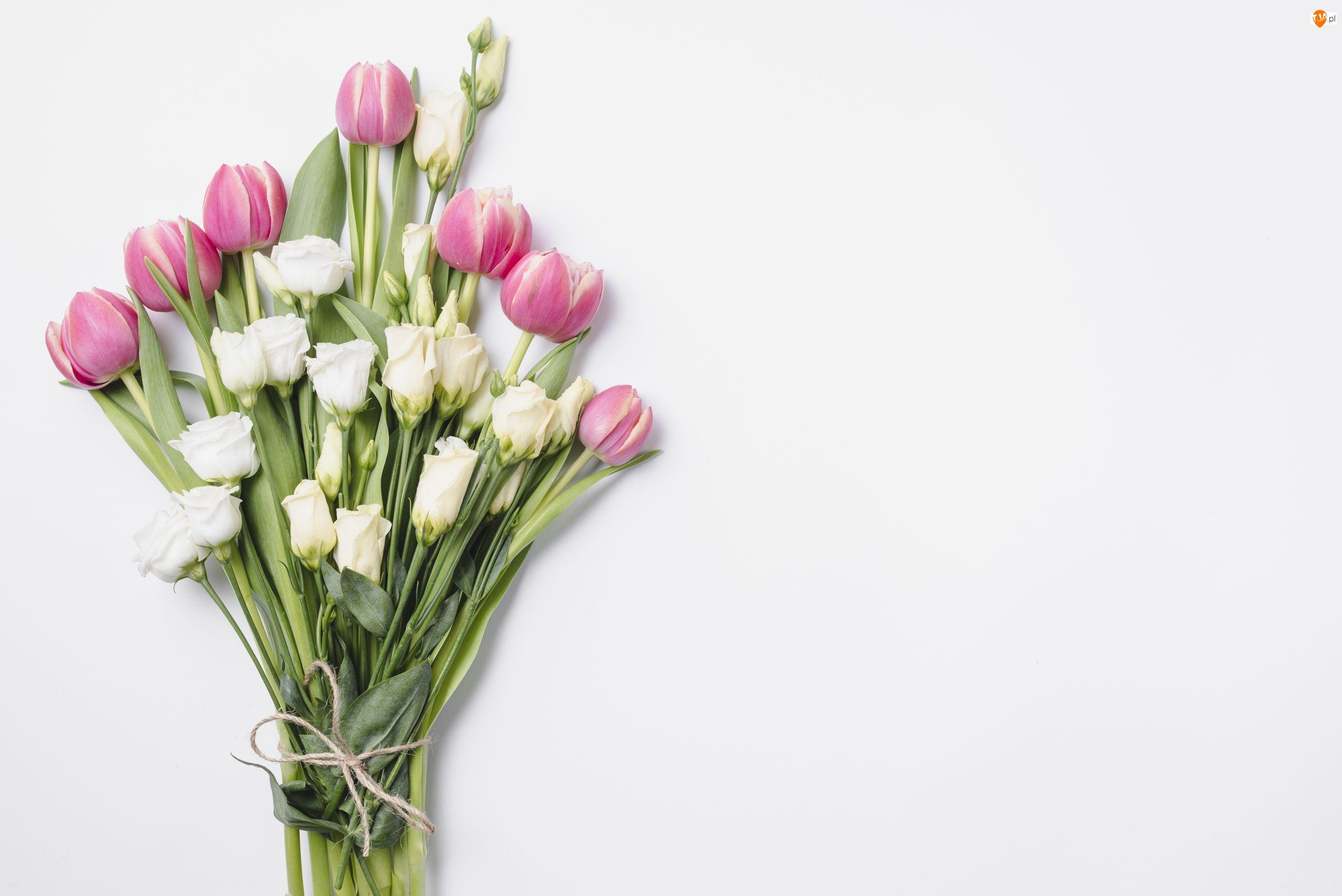 Tulipany, Kwiaty, Eustomy, Tło, Białe, Białe