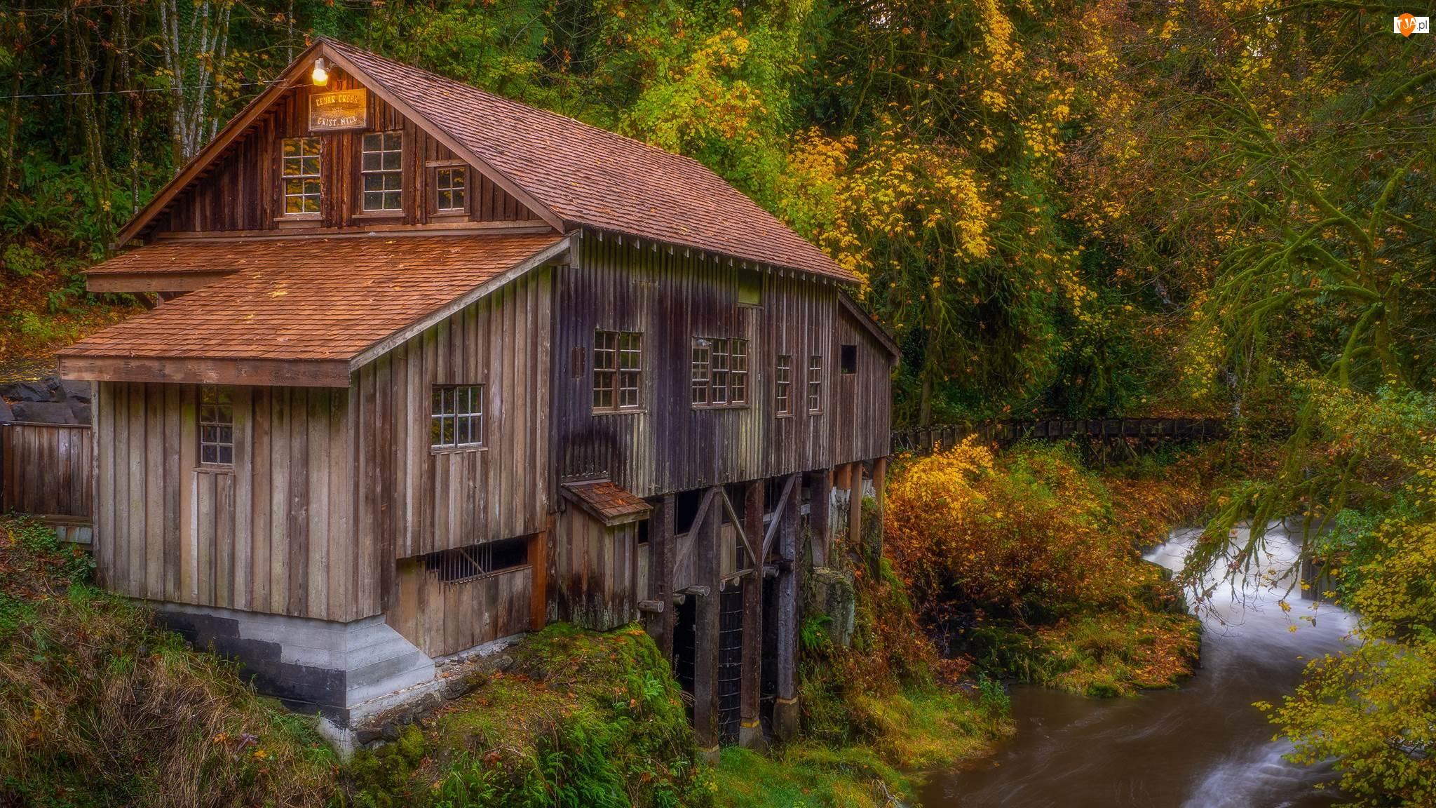 Woodland, Młyn, Las, Stan Waszyngton, Cedar Creek Grist Mill, Drzewa, Stany Zjednoczone, Rzeka